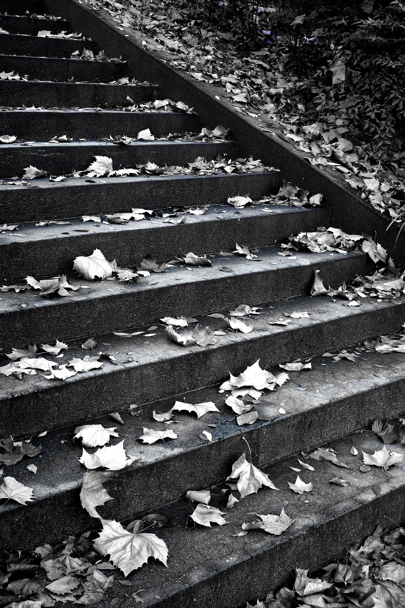 Steps by Steve Garrigues