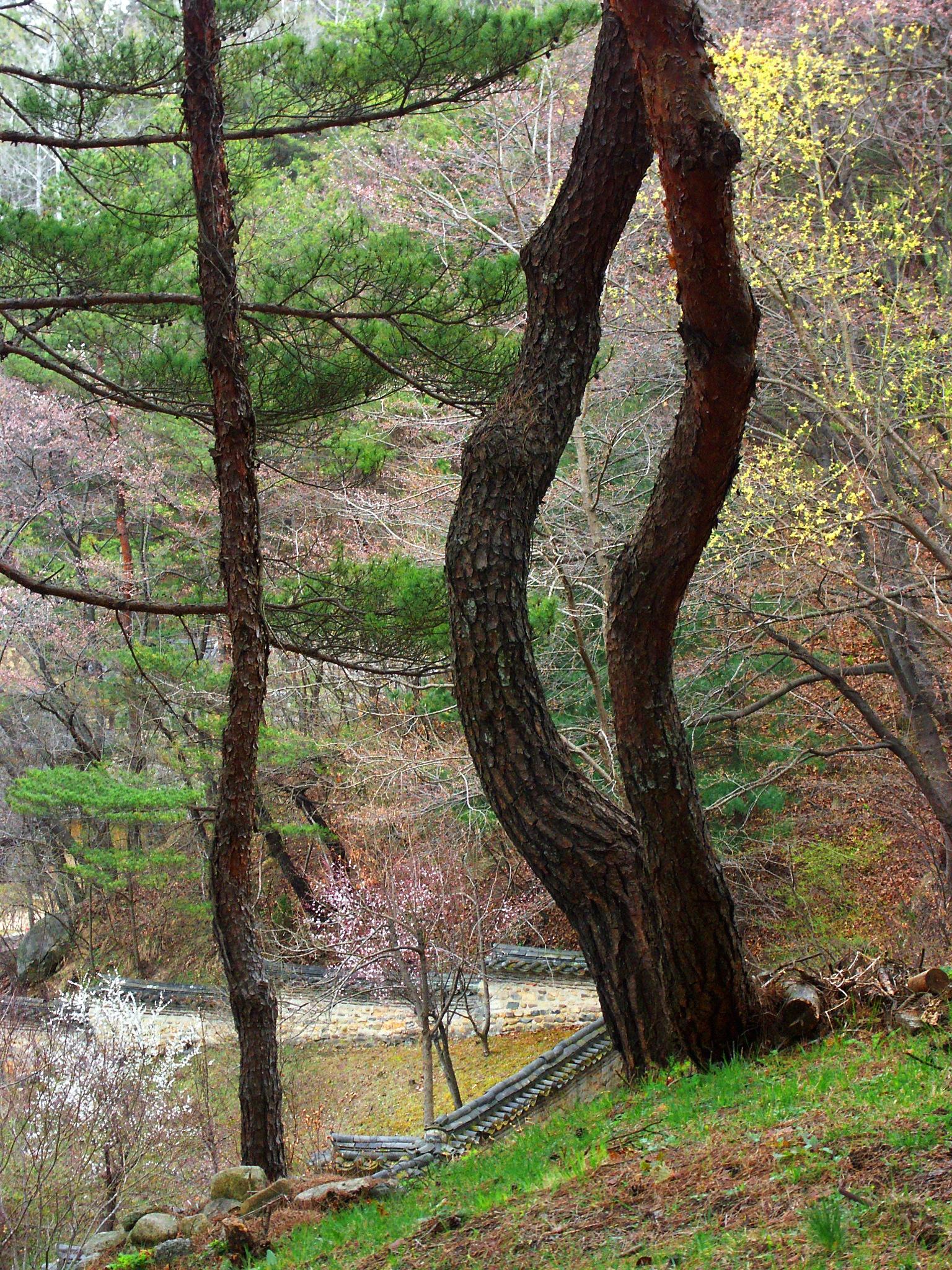 A Spring Hillside by Steve Garrigues
