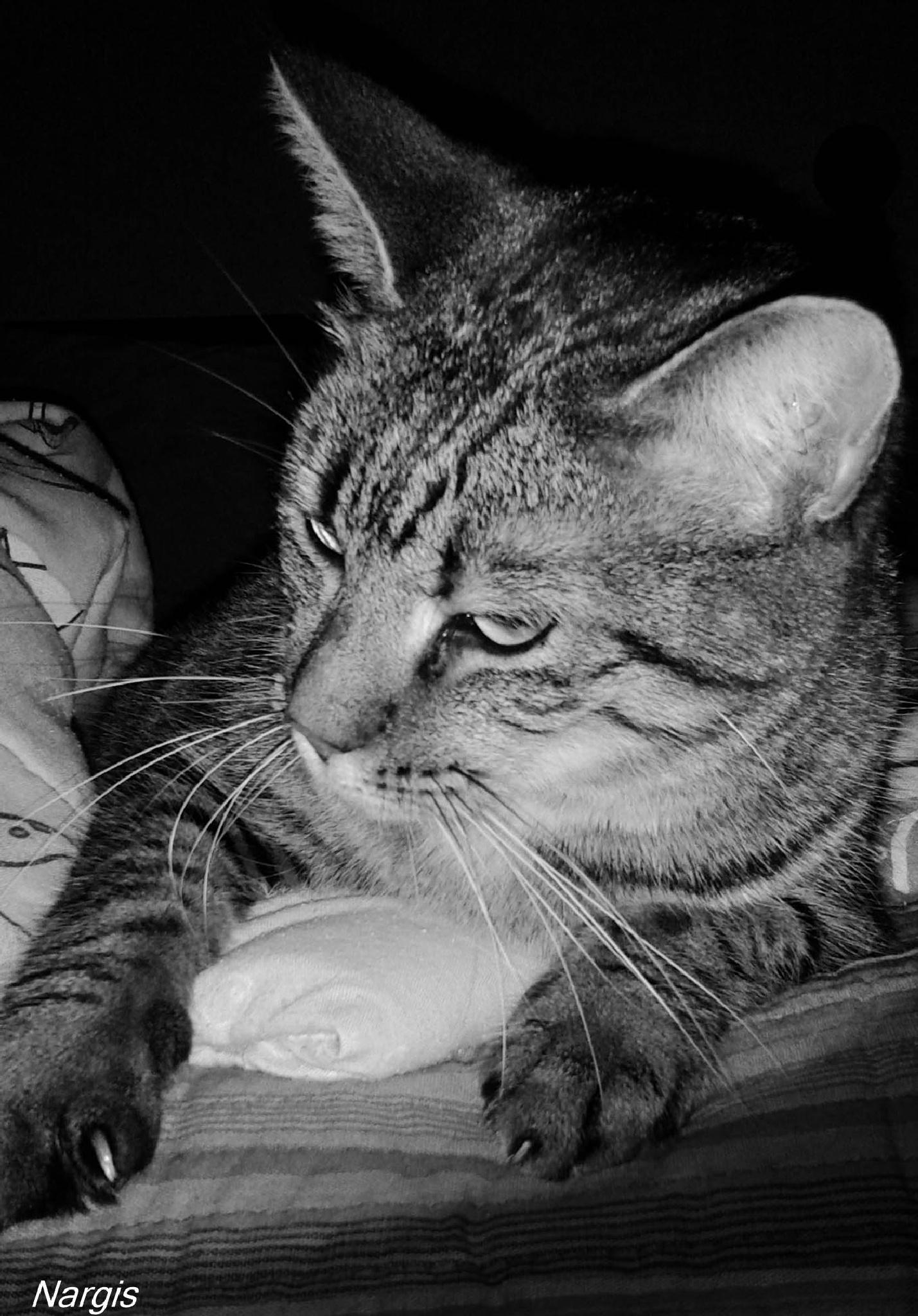 Sweet Kitty ! by Nargis Halter