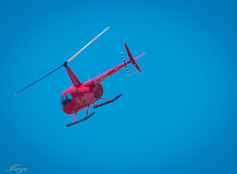 Fly by Nargis Halter