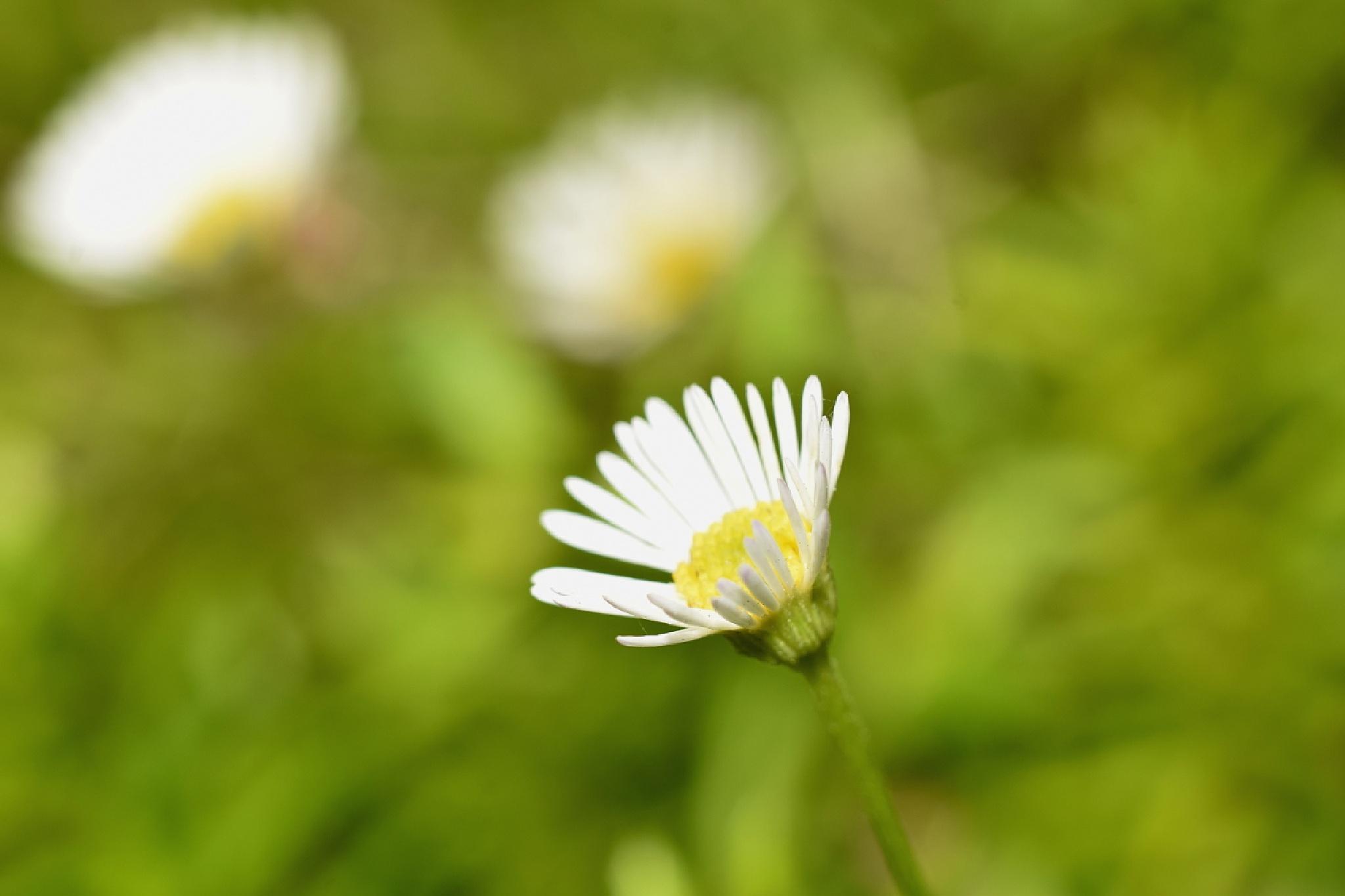 white flower by netpm