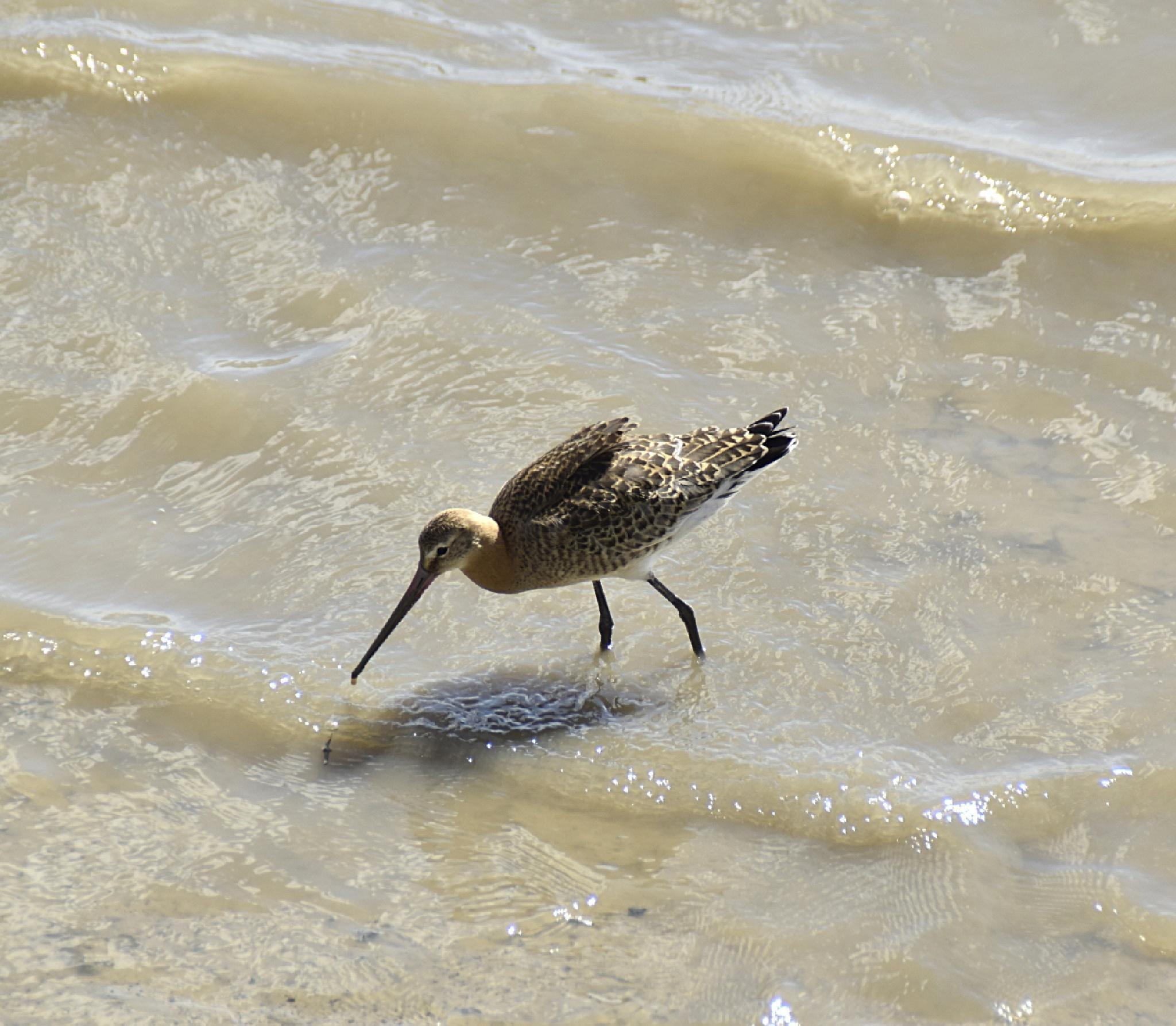 Bird by netpm