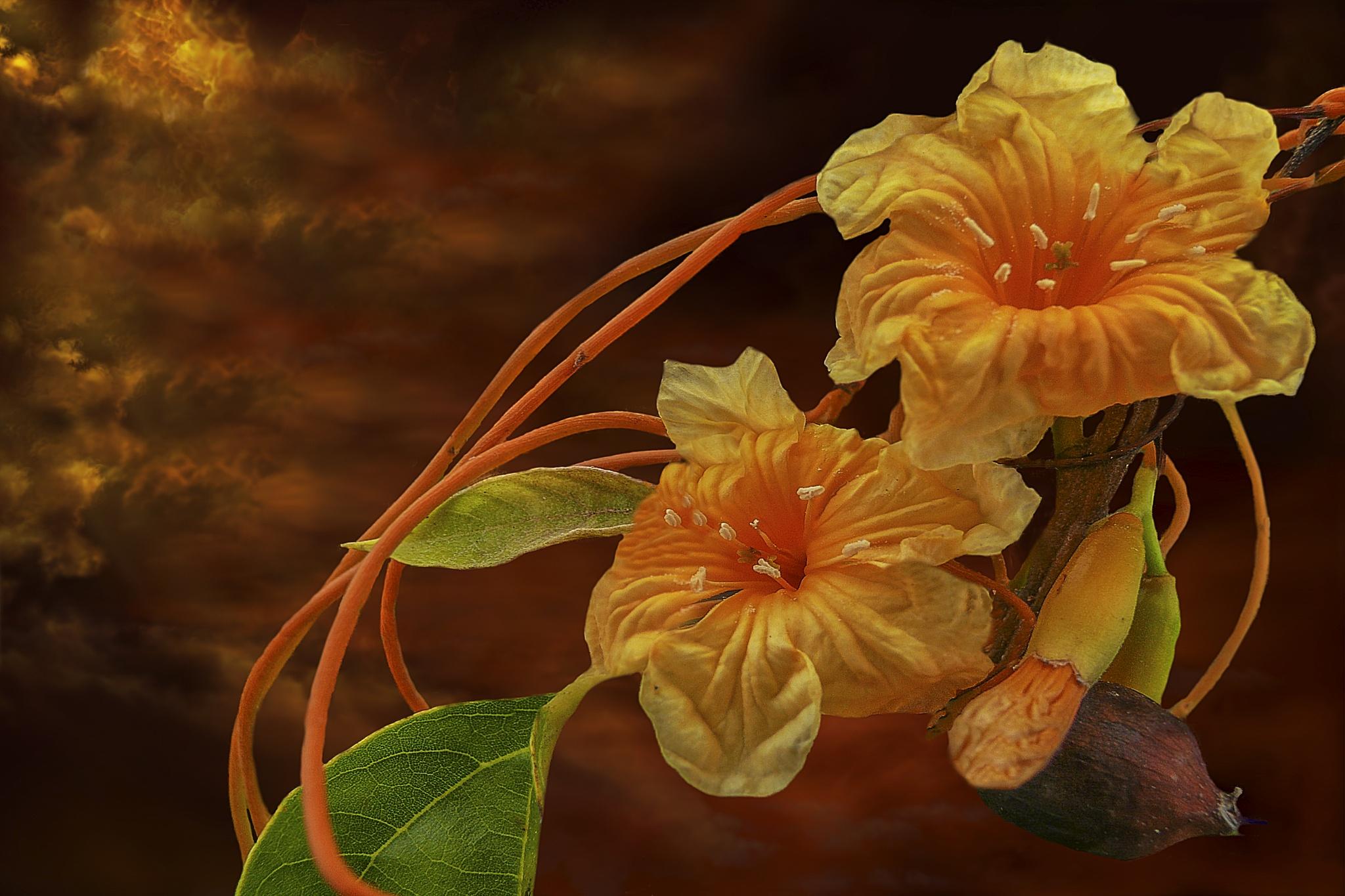 Photo in Fine Art #flowers sunset