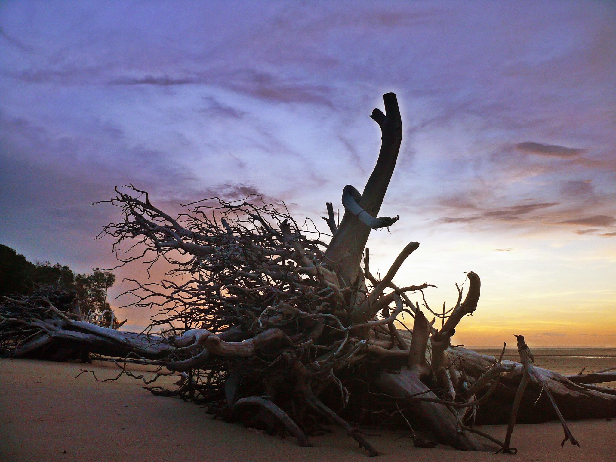 DEAD TREE  by EVA