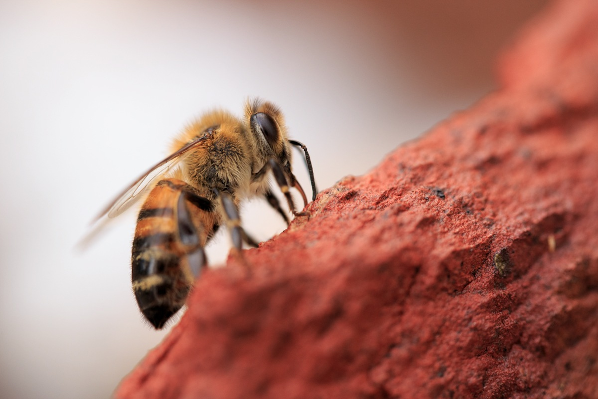 Bee on a Brick by KingRuss