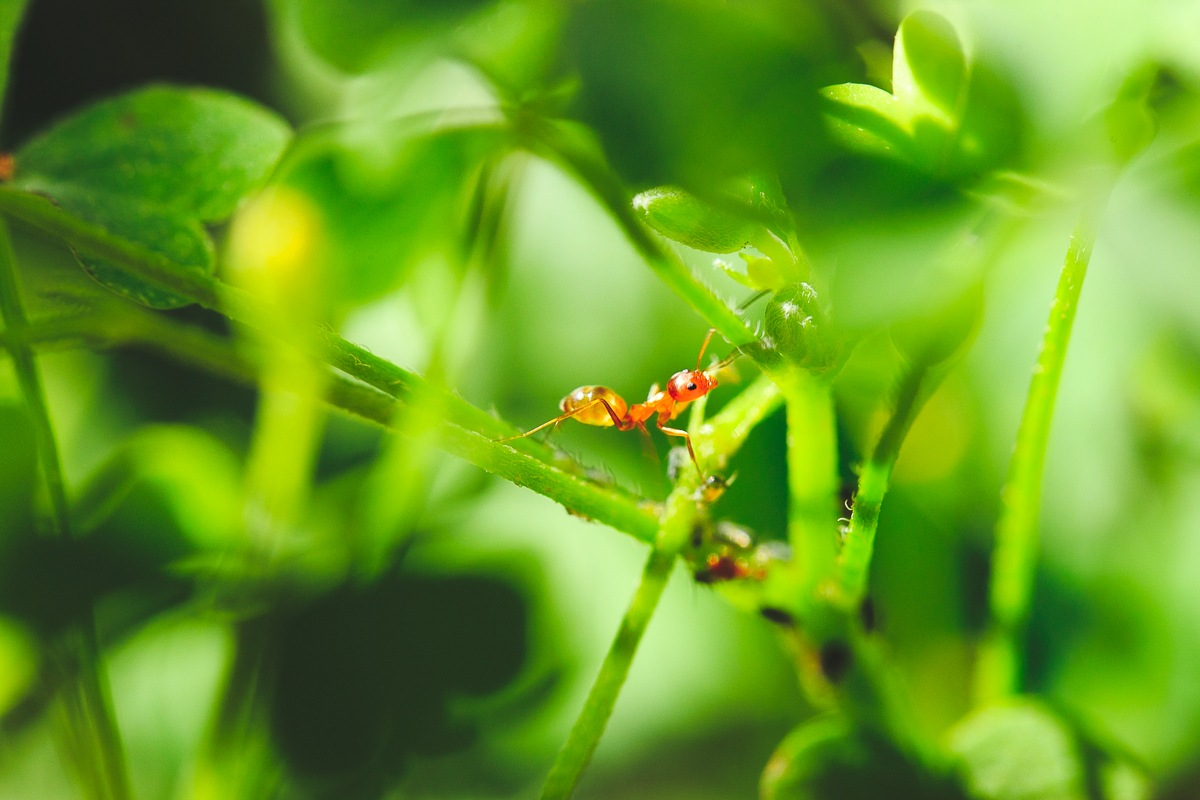 Ant in Green by KingRuss