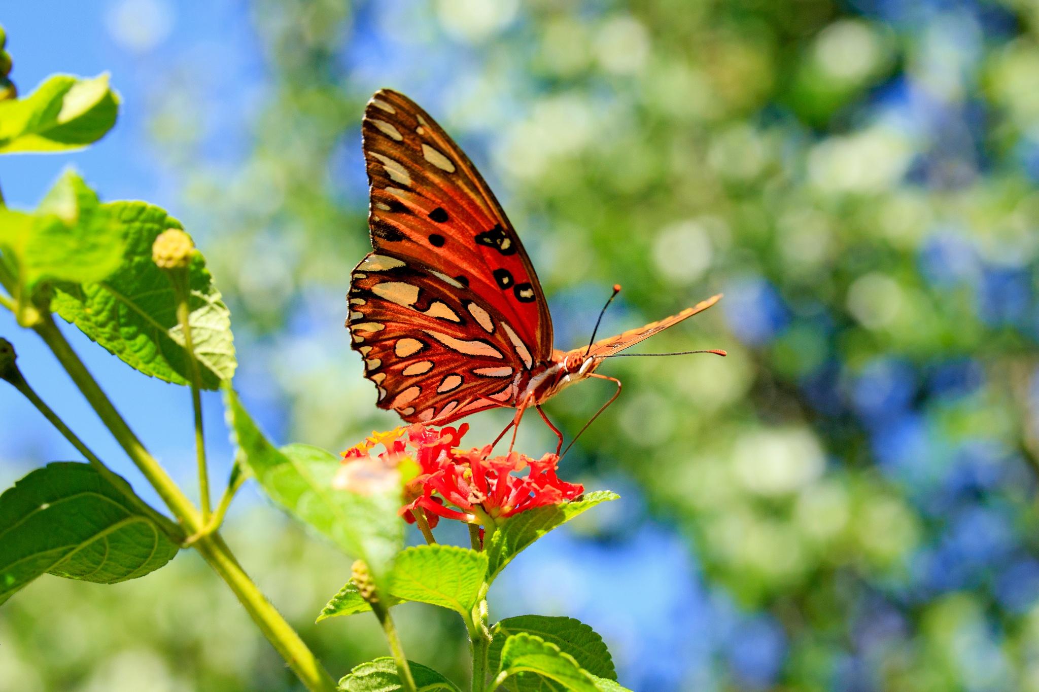 Under a Butterfly by KingRuss