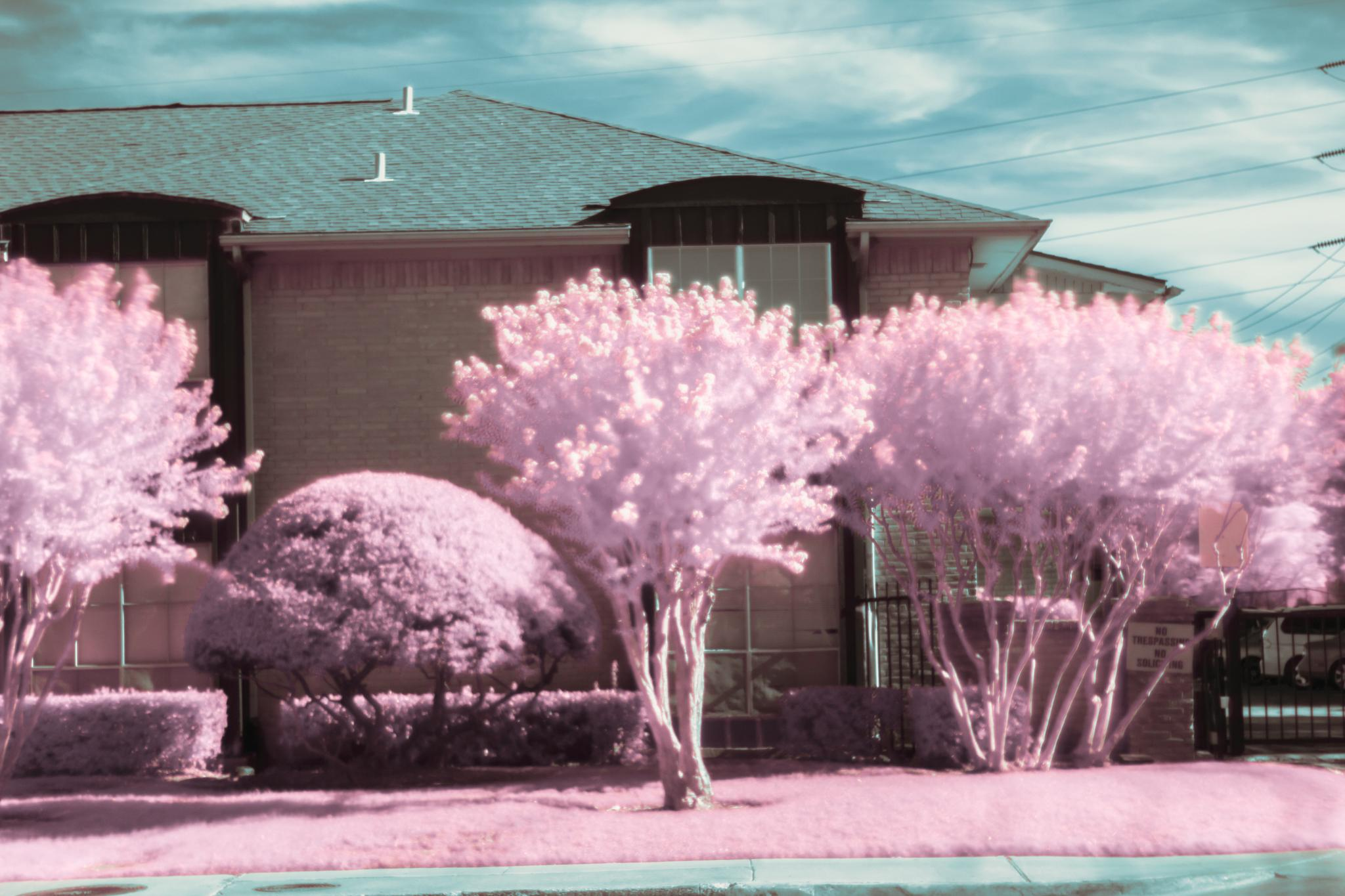 infrared photography by razielcameron