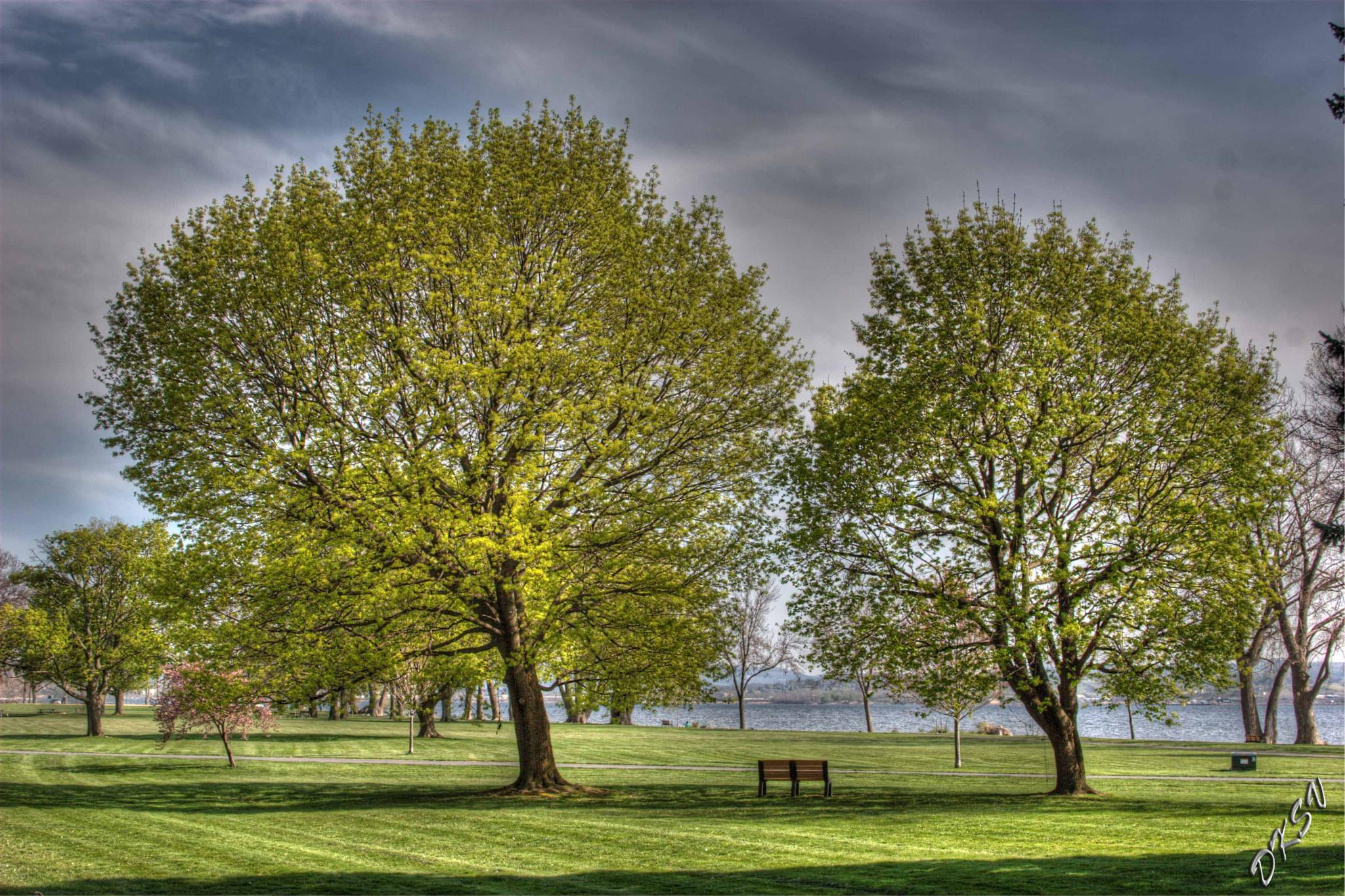 The Bench 1 by William Bulger
