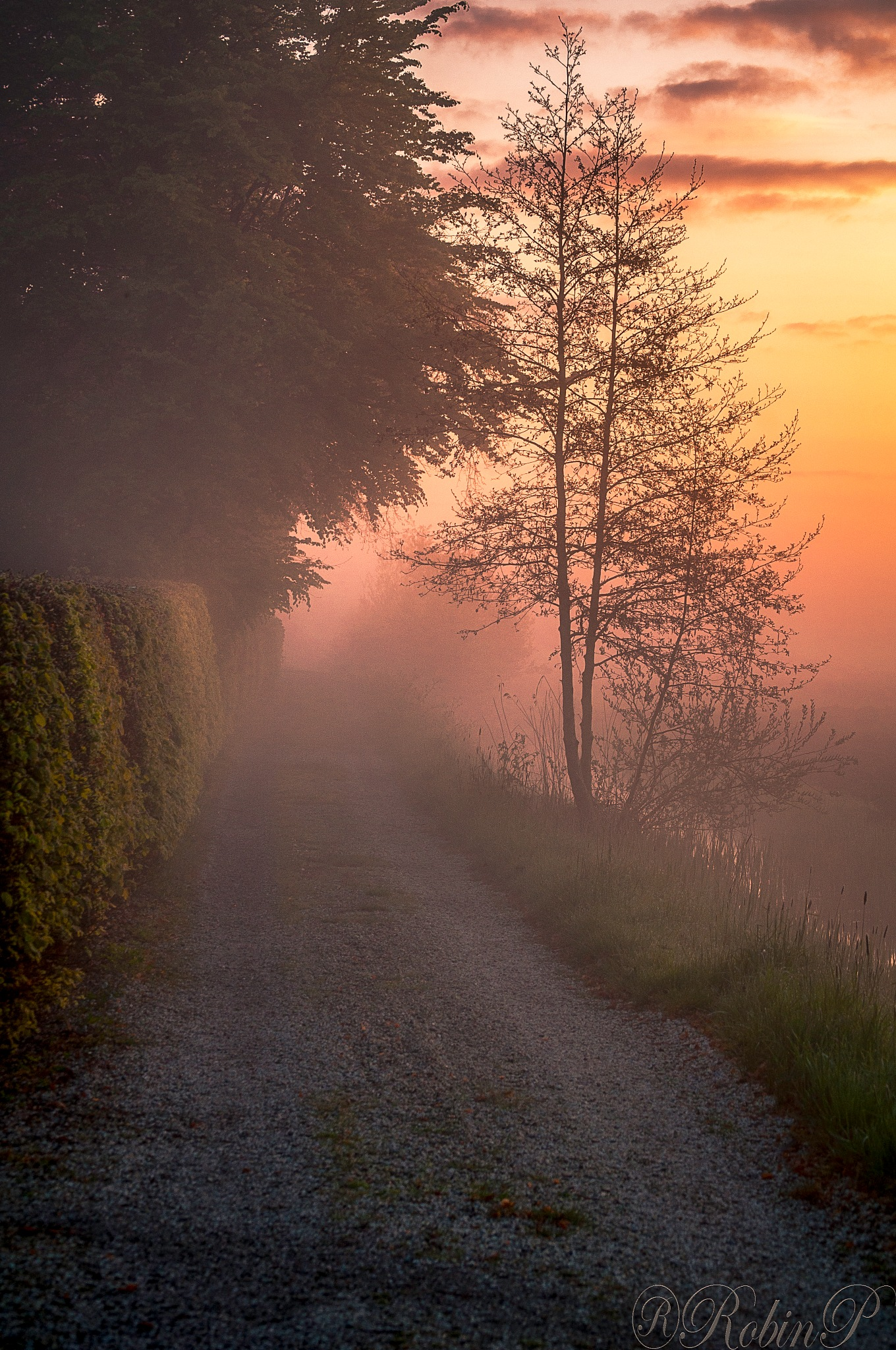spring morning by Robin Pulles