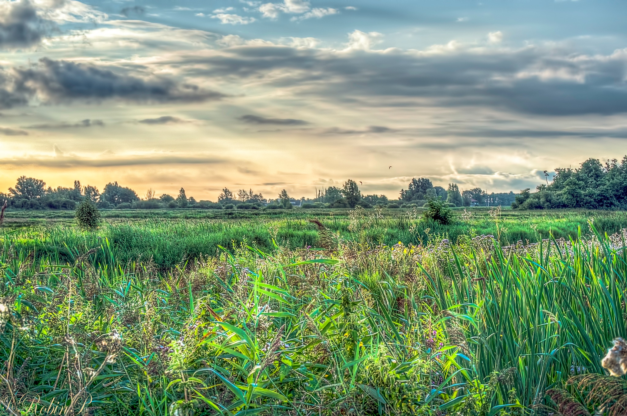 Dutch wetlands by Robin Pulles