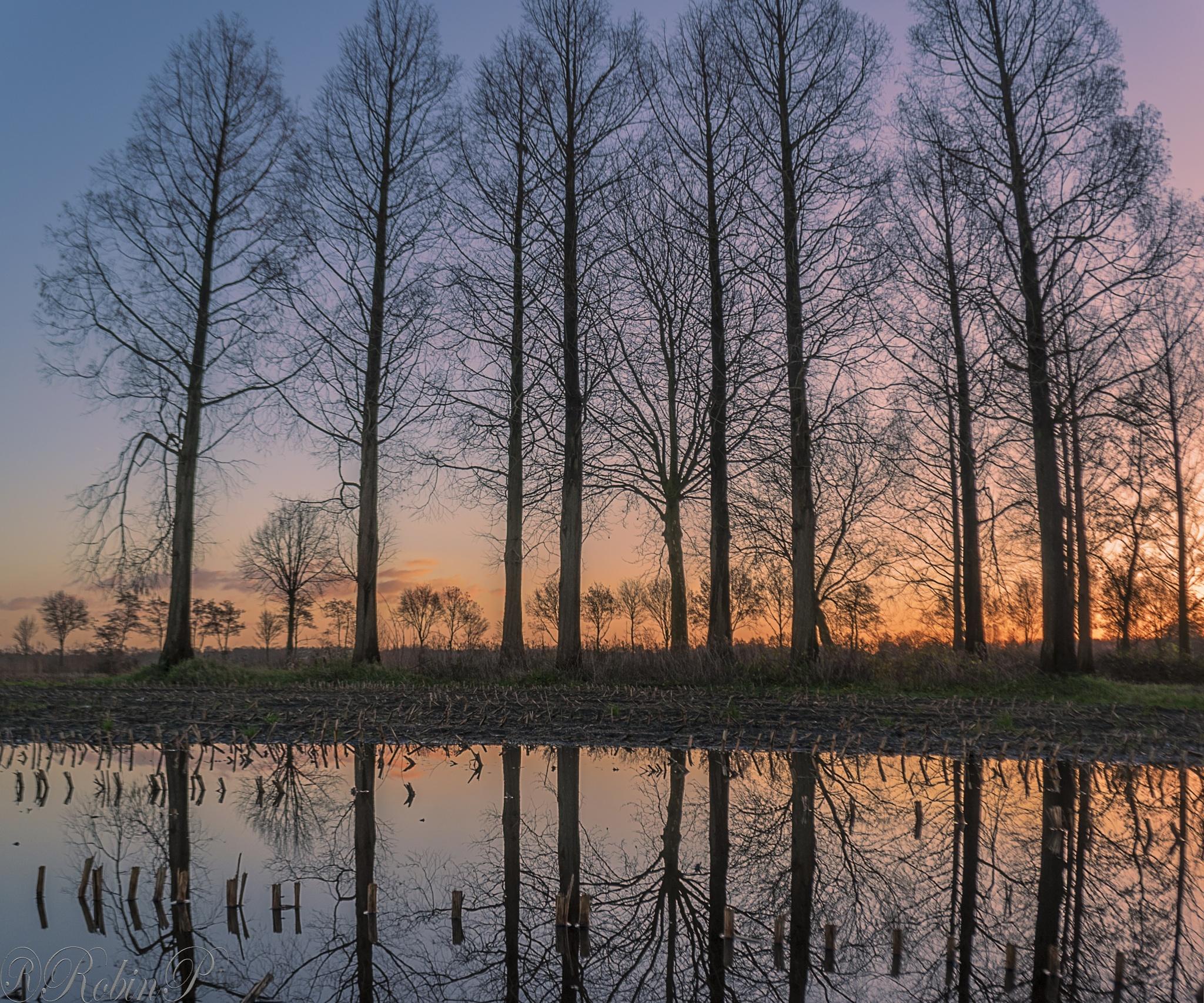 Fields in winter by Robin Pulles