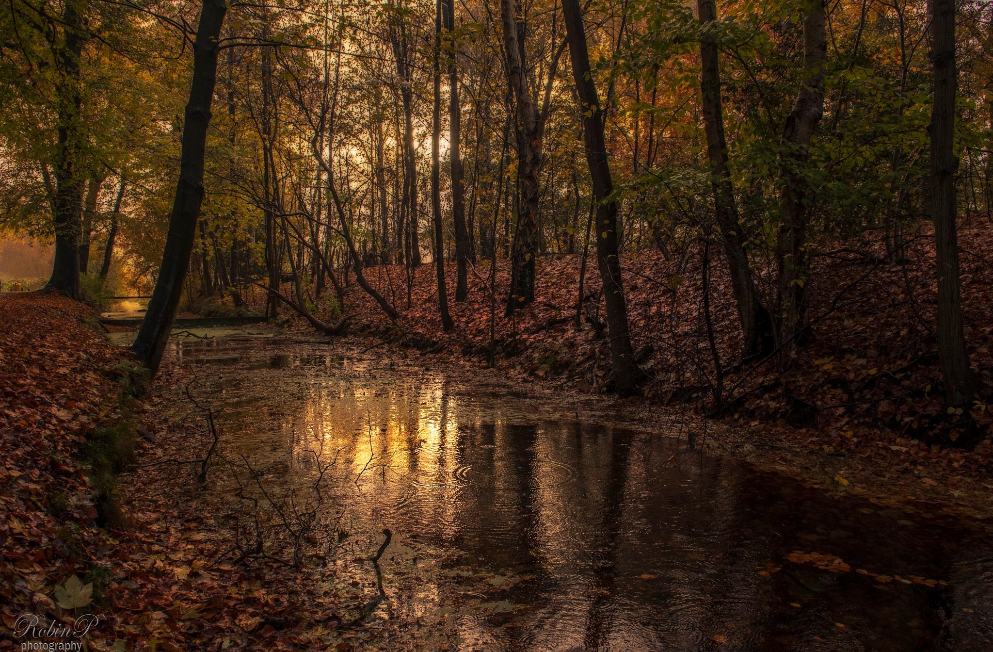 November rain by Robin Pulles