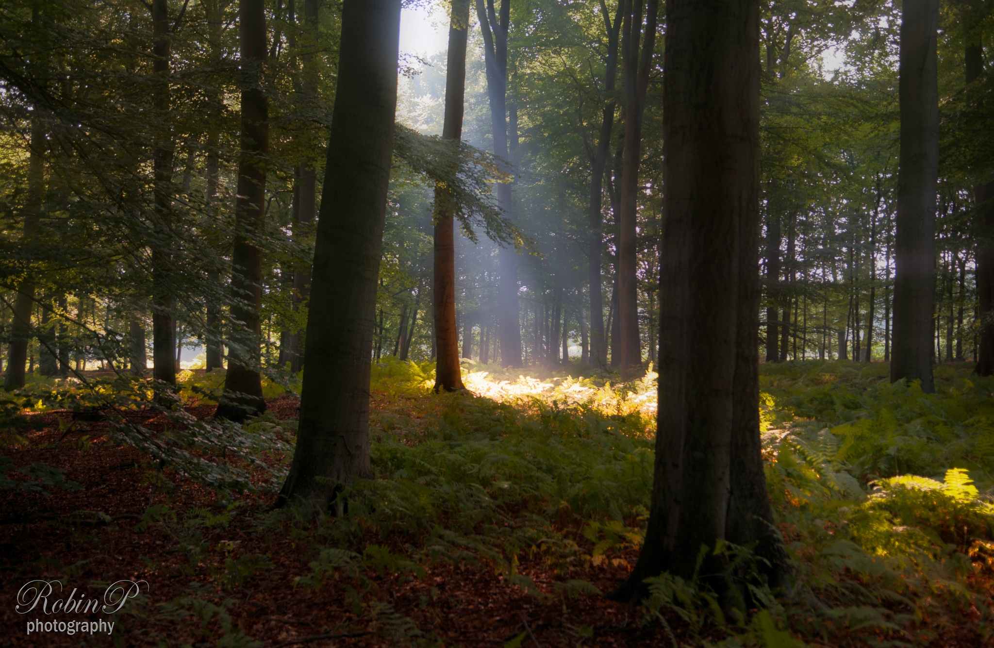 Rays in the morning by Robin Pulles