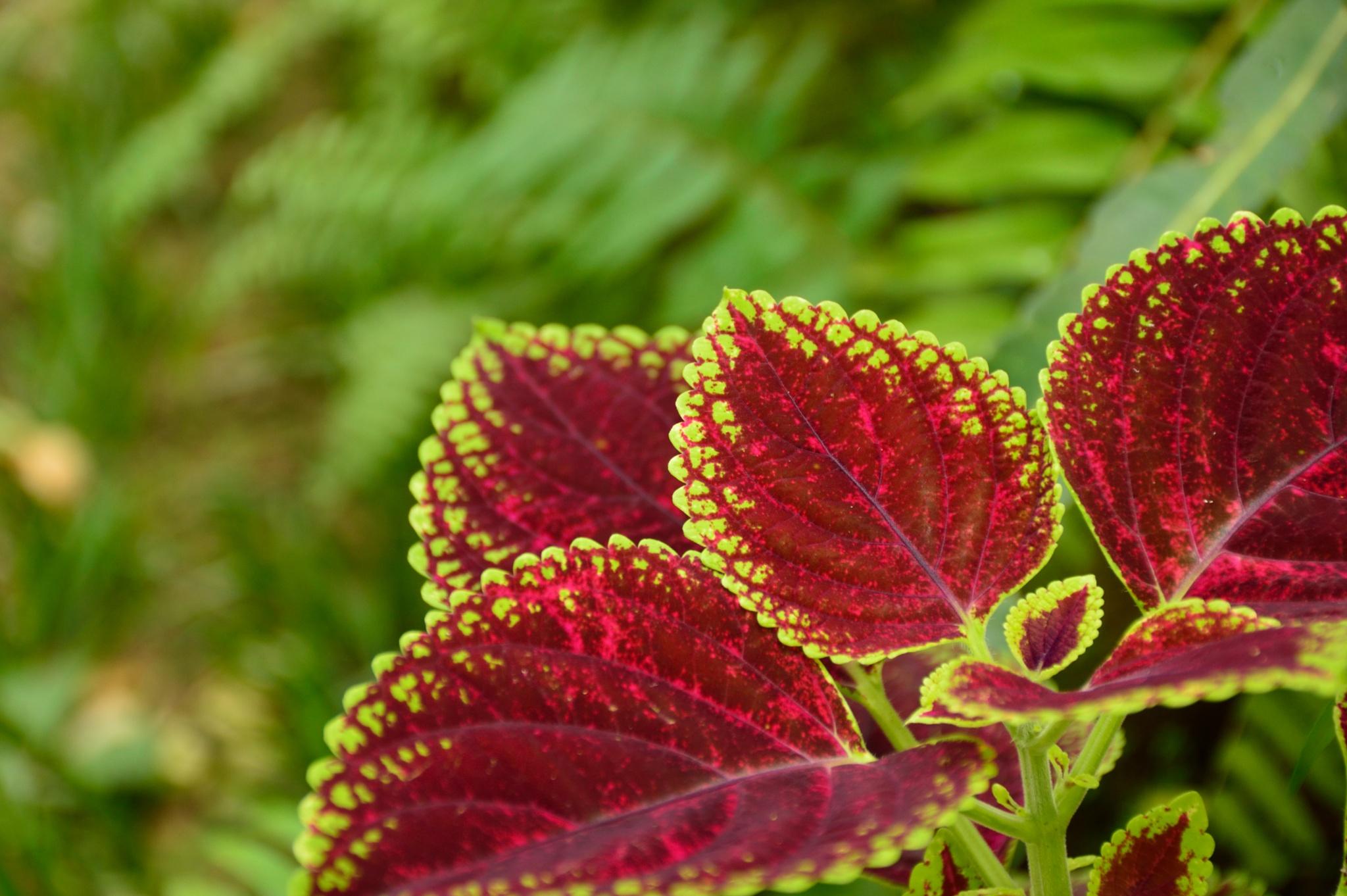 Moments from Phuket Botanic Garden #1 by Laszlo Ecsedi