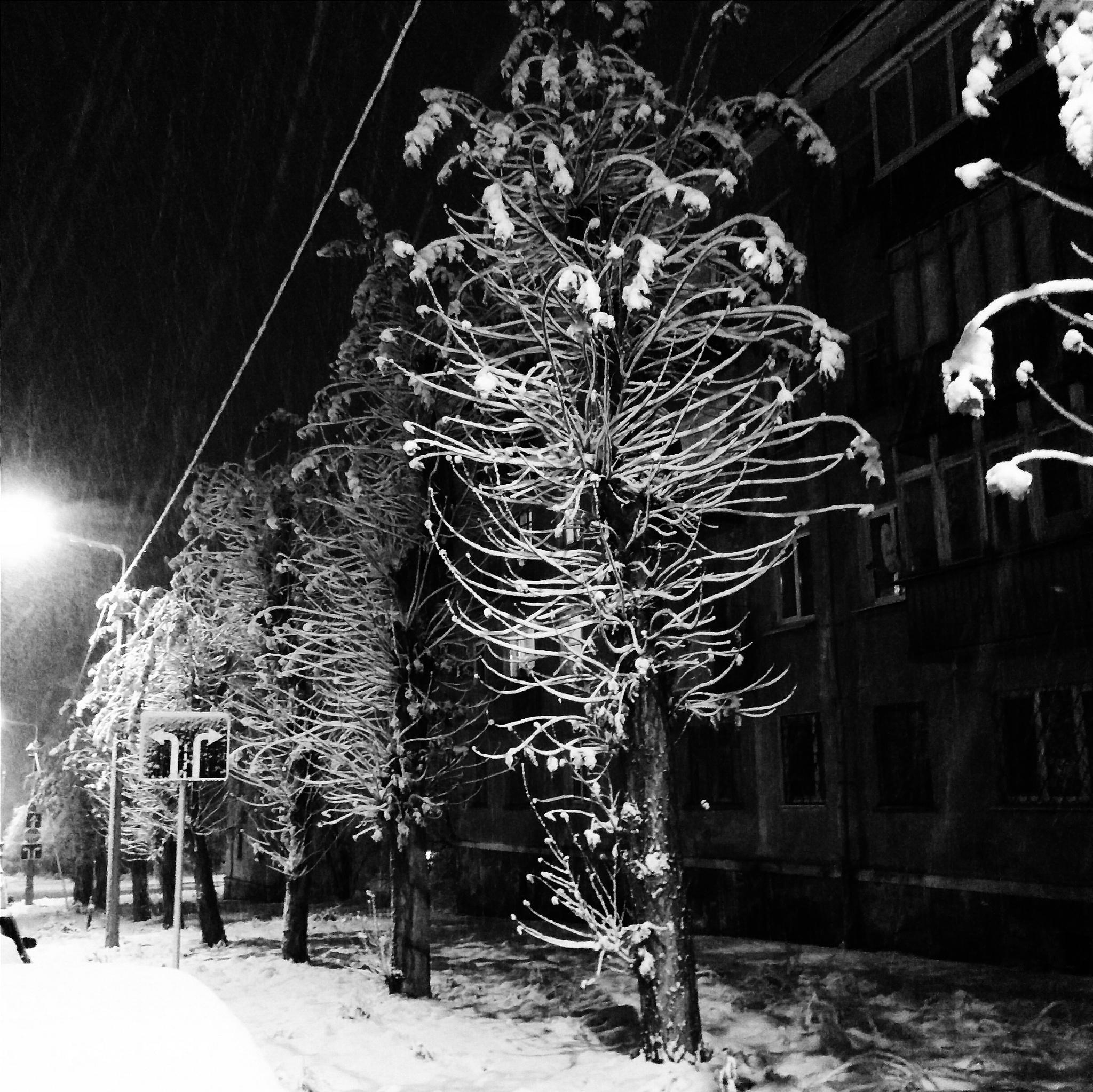 First Snow by Constantine Voronin