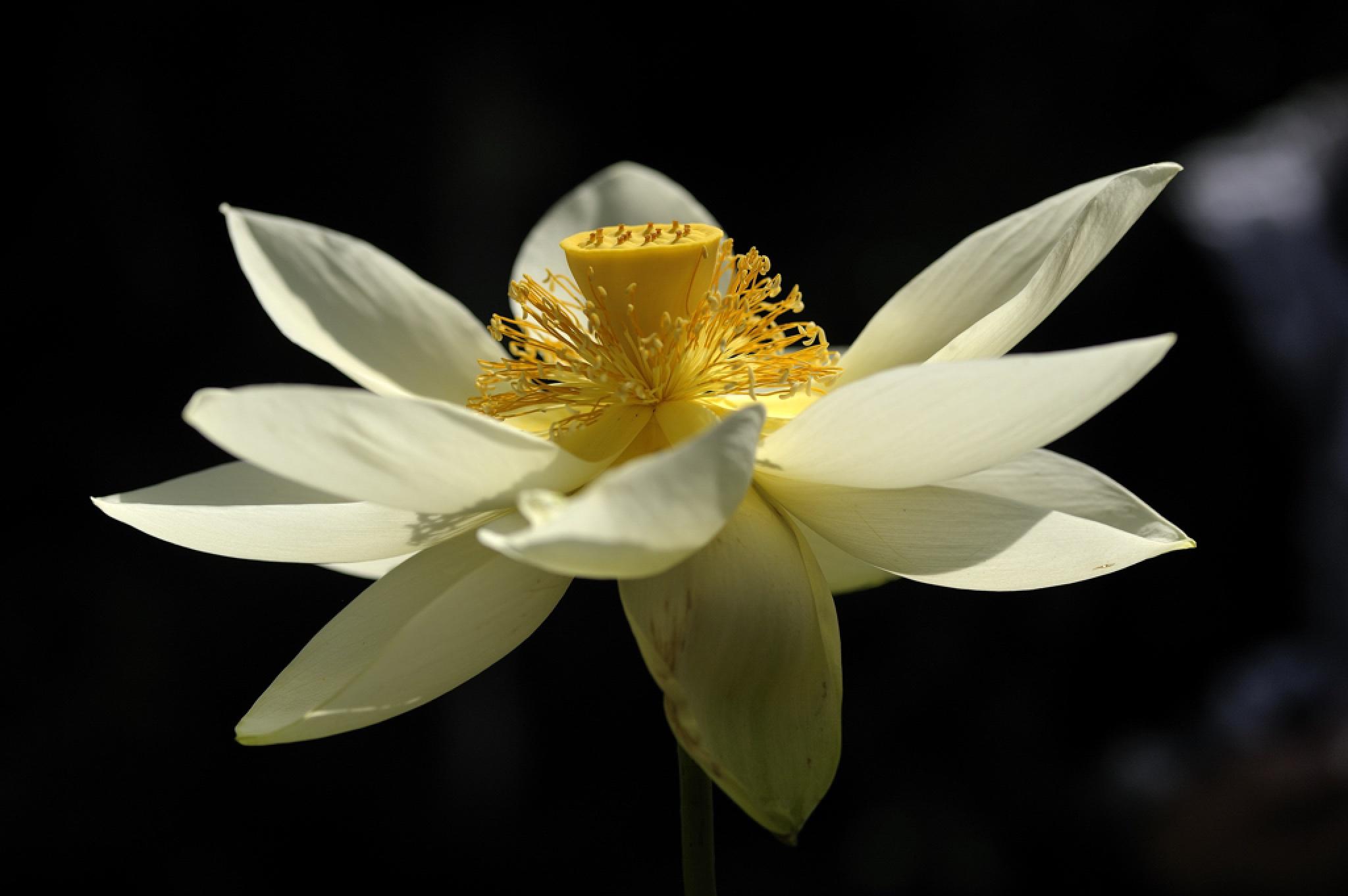 white beauty by Stephan Winkler