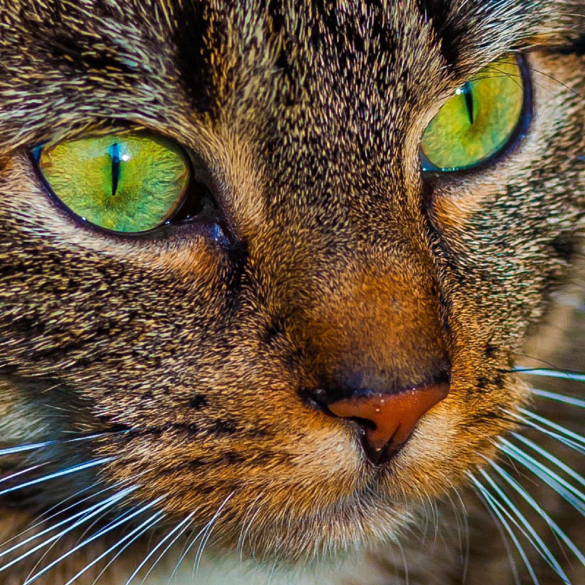 Green Eyes by Stephan Winkler