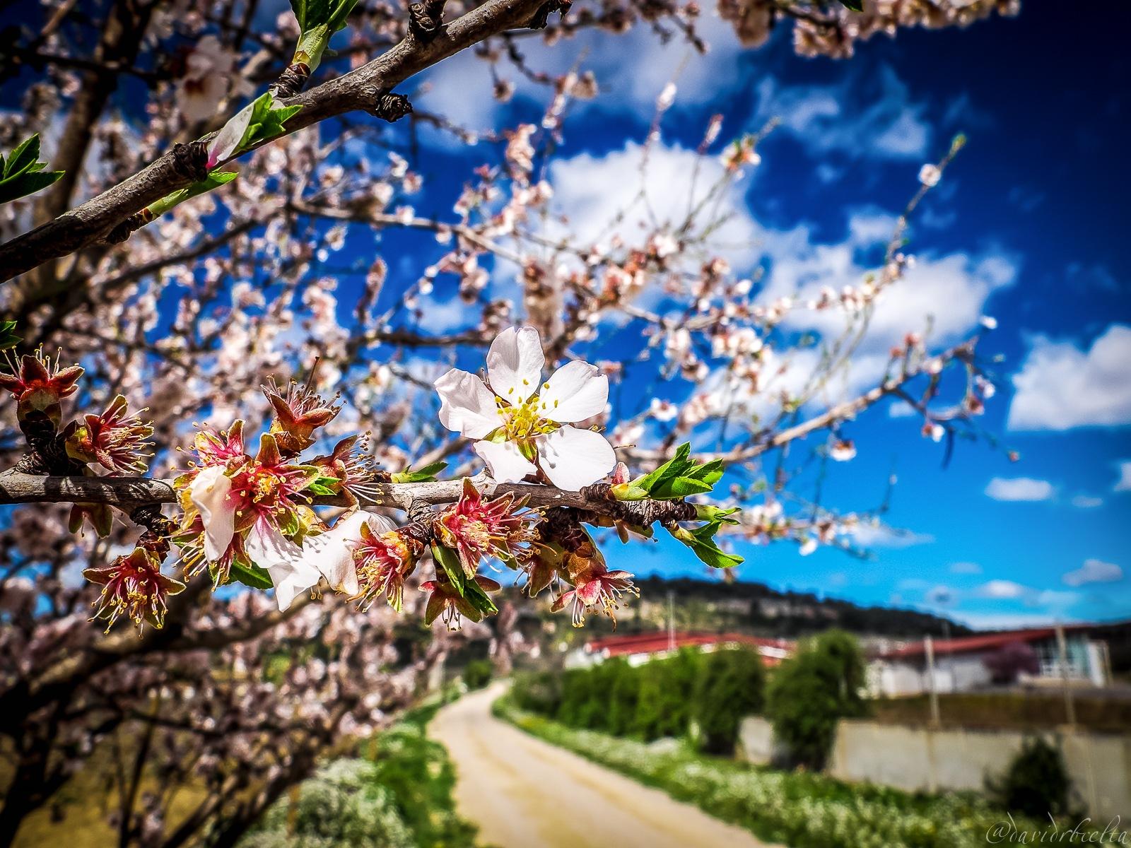 Ja es primavera al Penedès by David Roldán