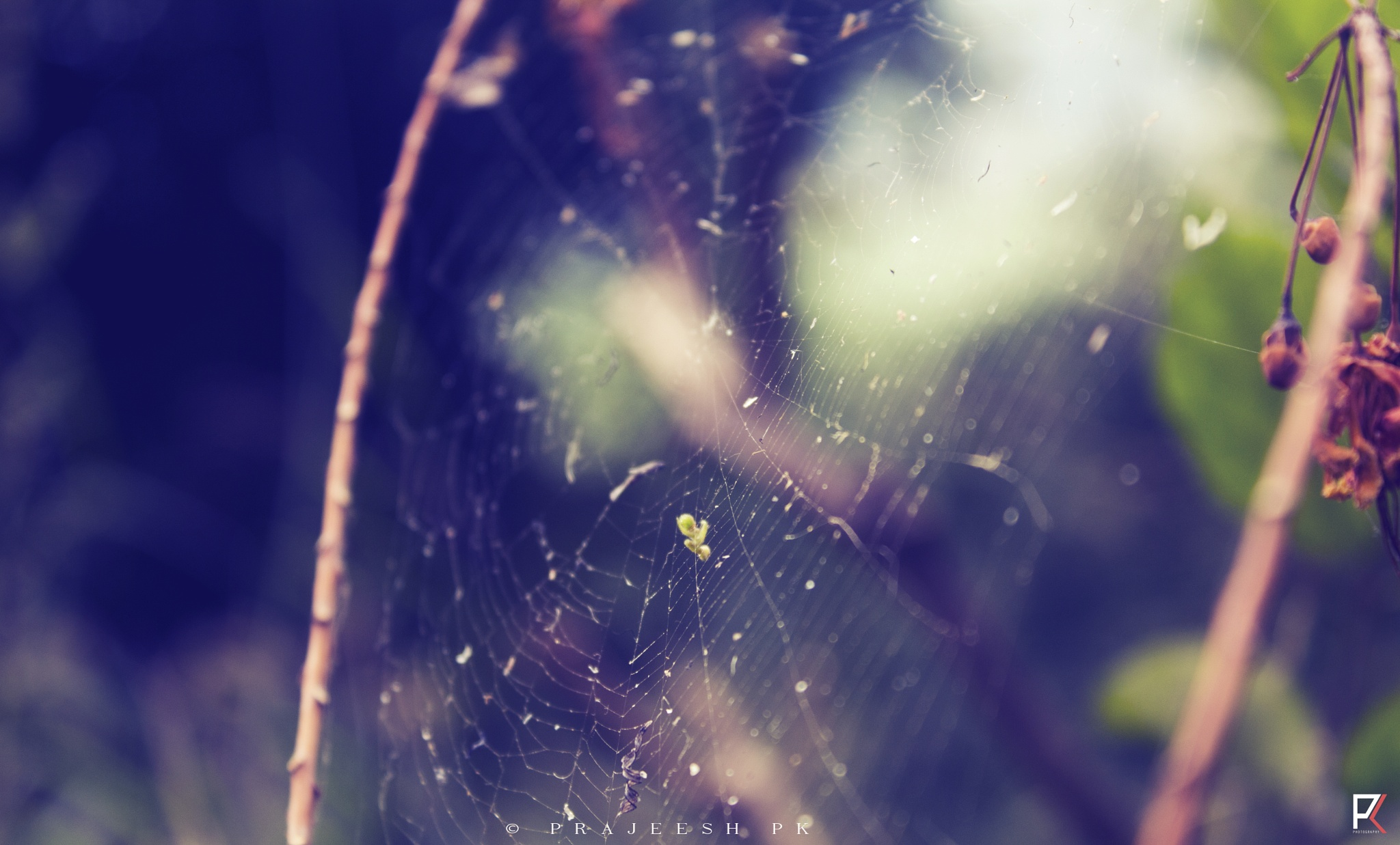 Spider Web  by PK