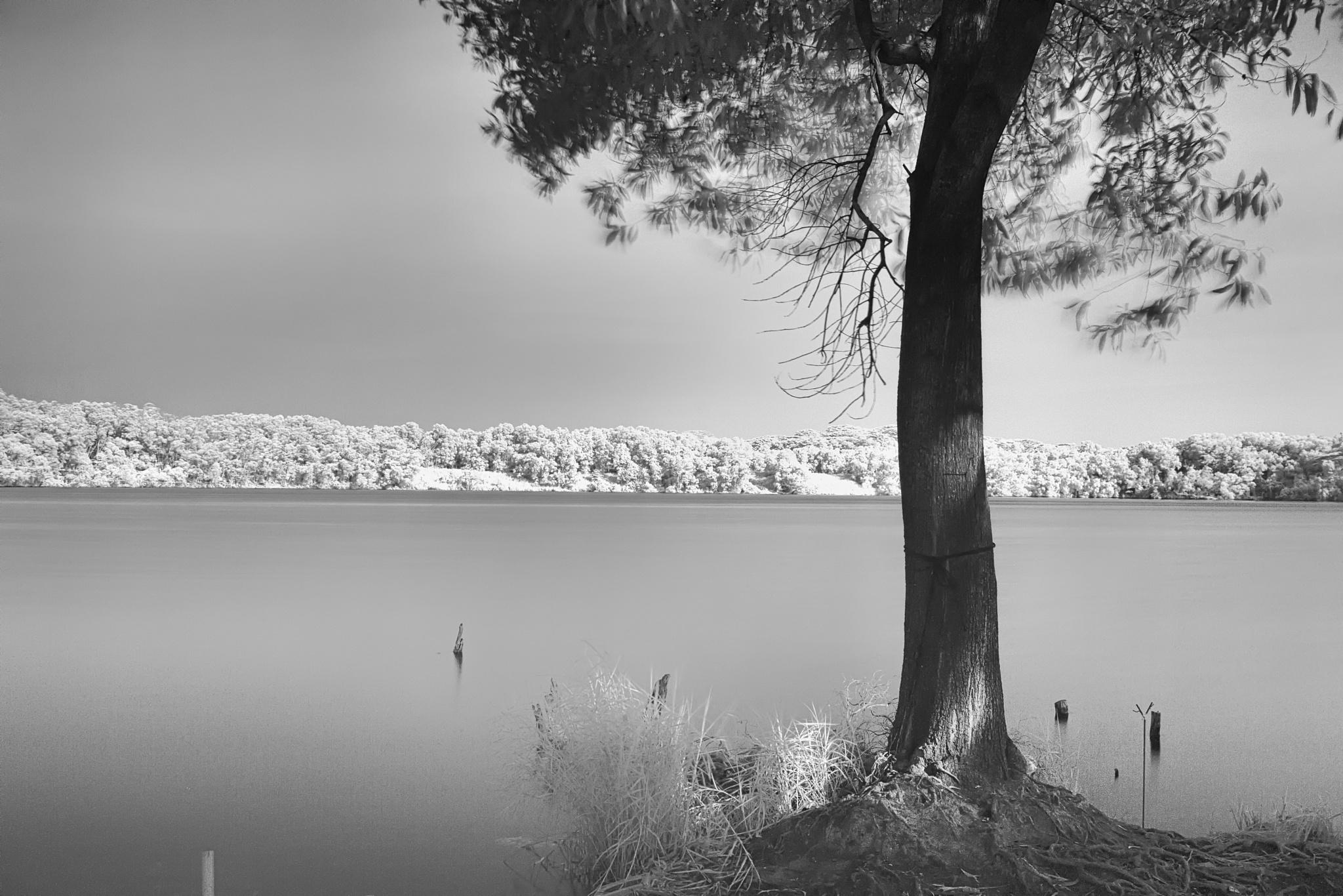 A Tree on the Shore by ravikumarjambunathan