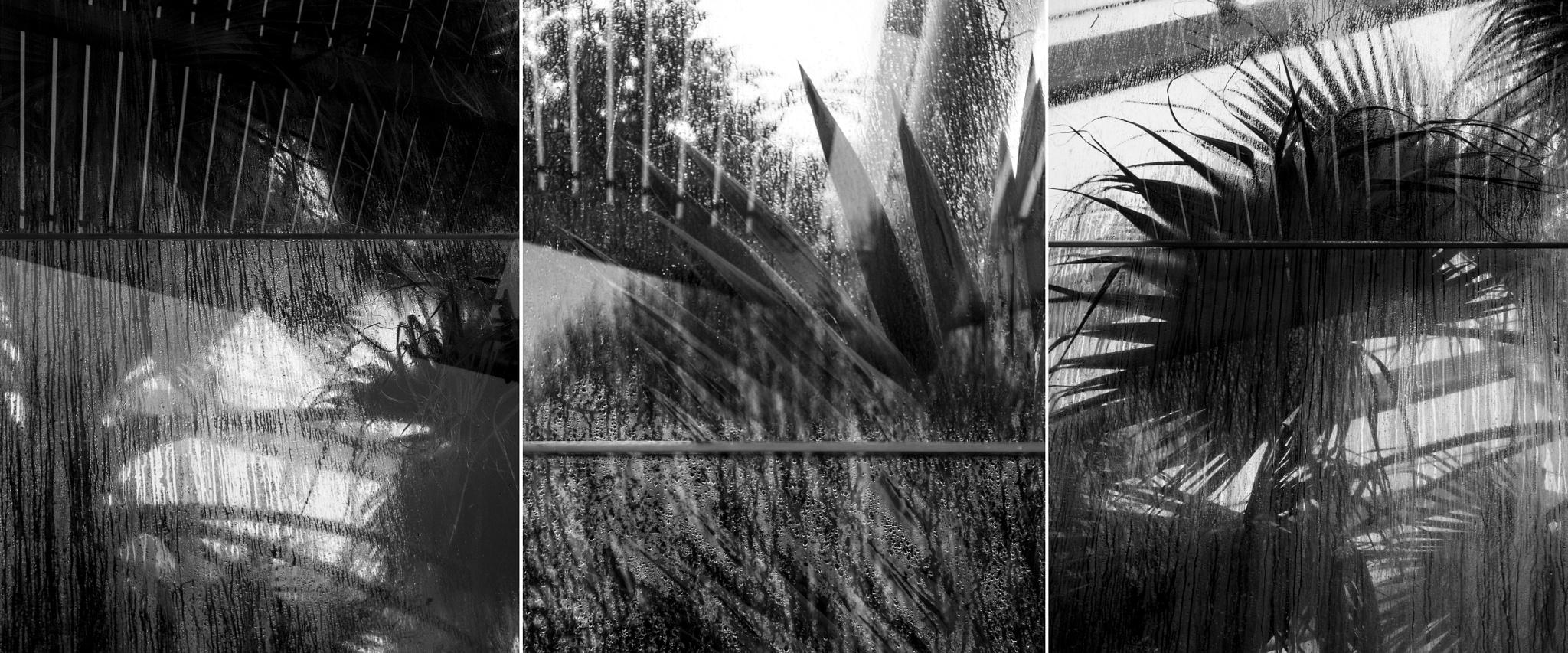 Triptych by SteveH