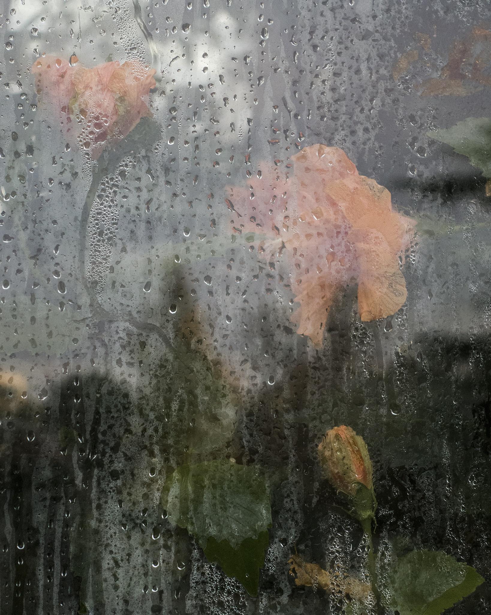 Flowers behind glass by SteveH