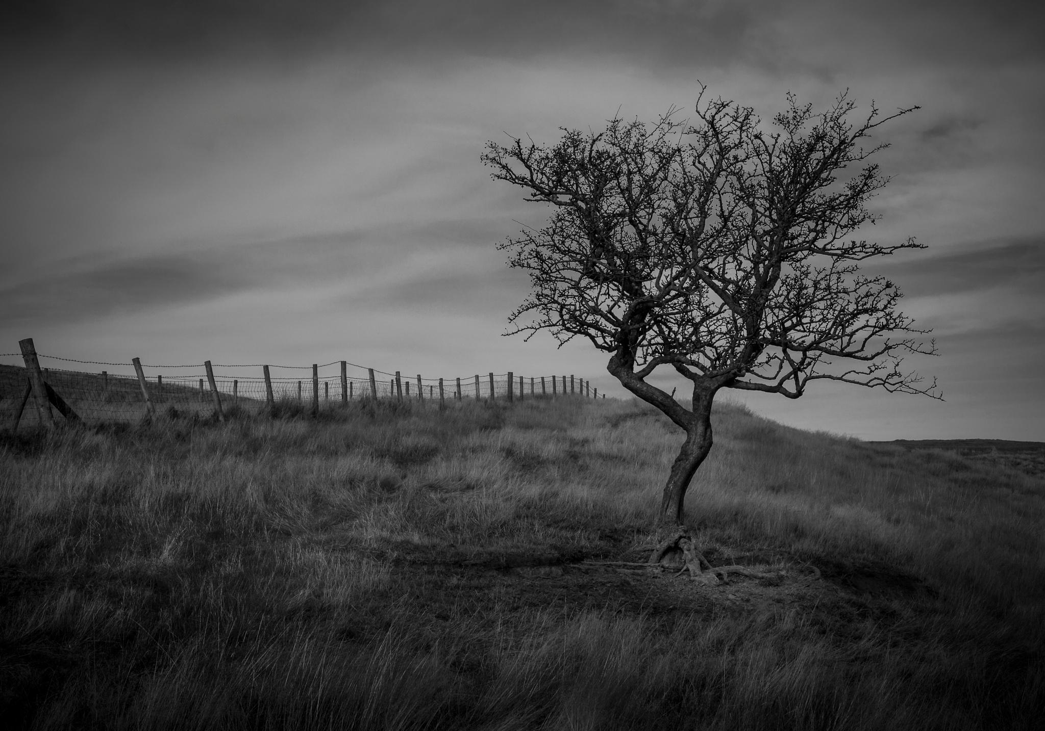 Alone on Roseberry by BradShaw