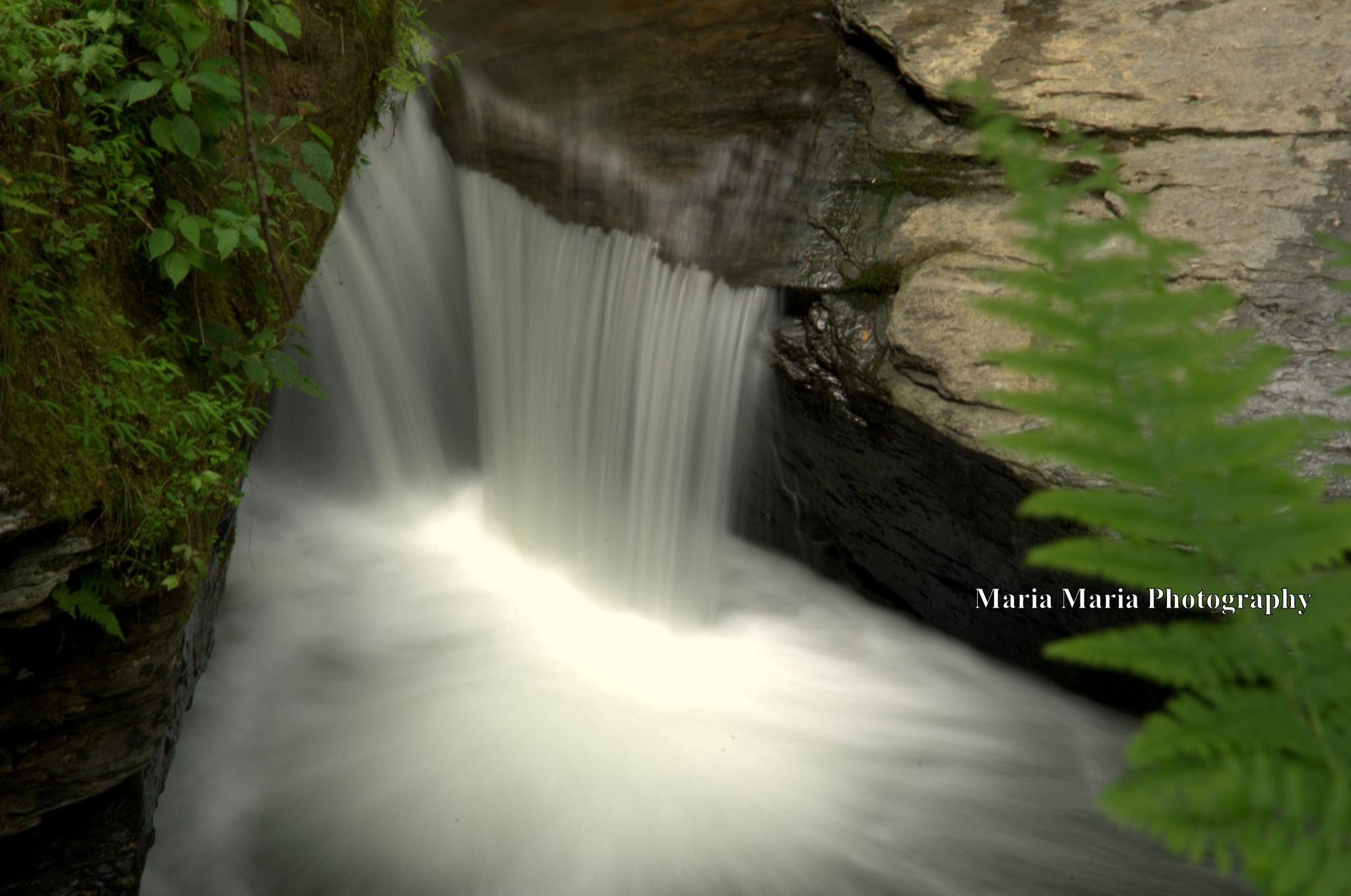 Waterfall by Maria Sheffield-Stankiewicz