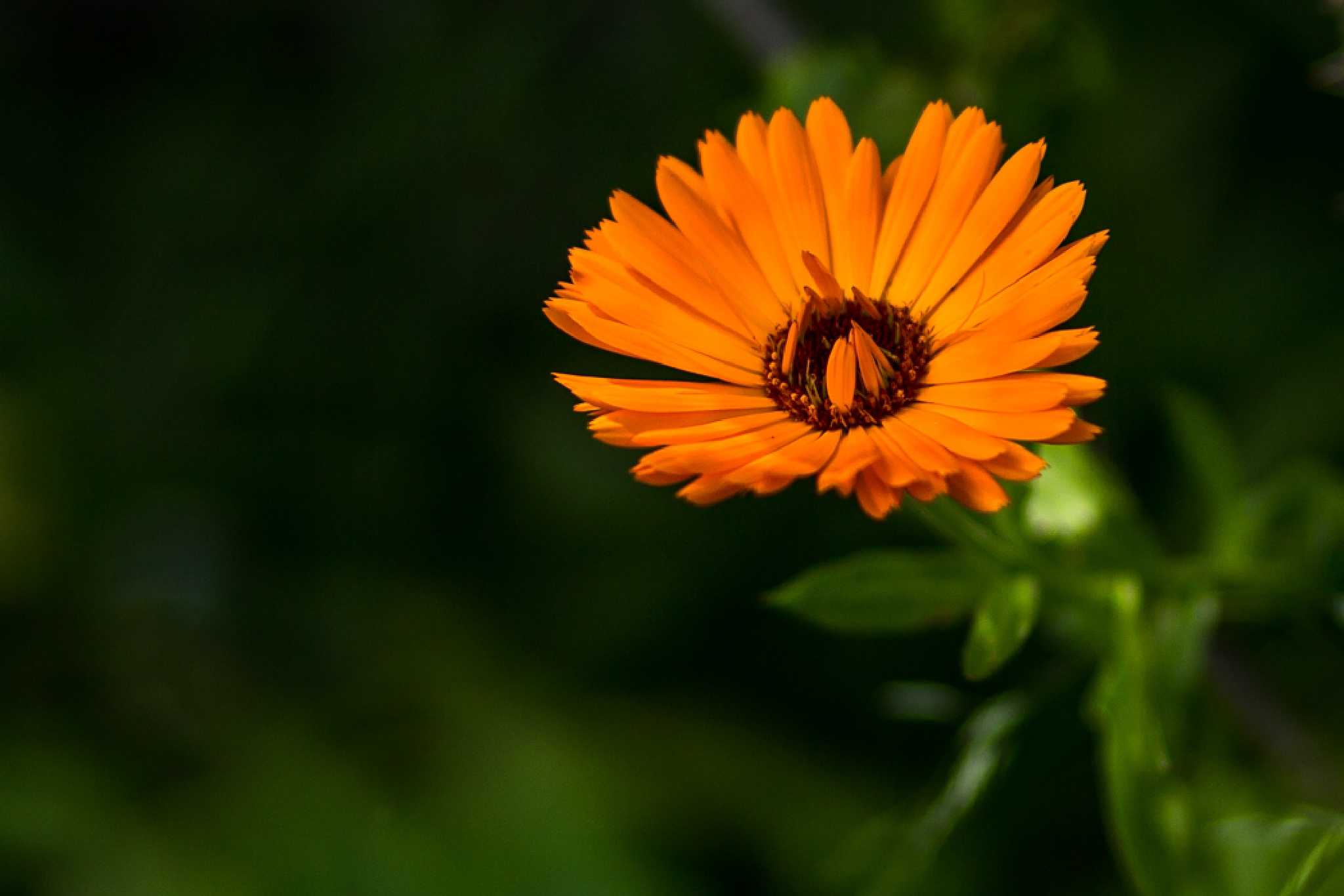 my little orange flower by Ronny Andries