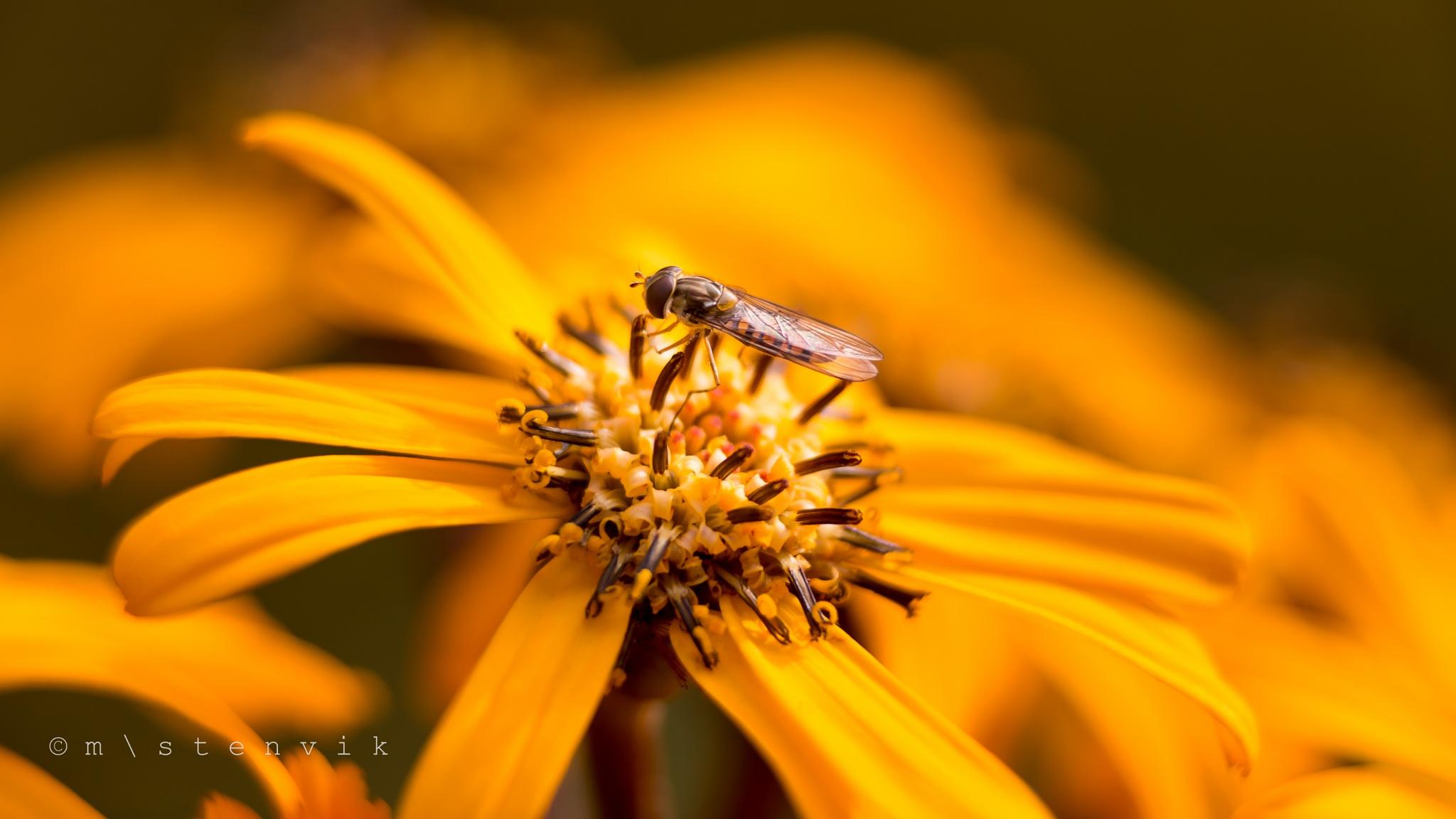 Flower by mstenvik