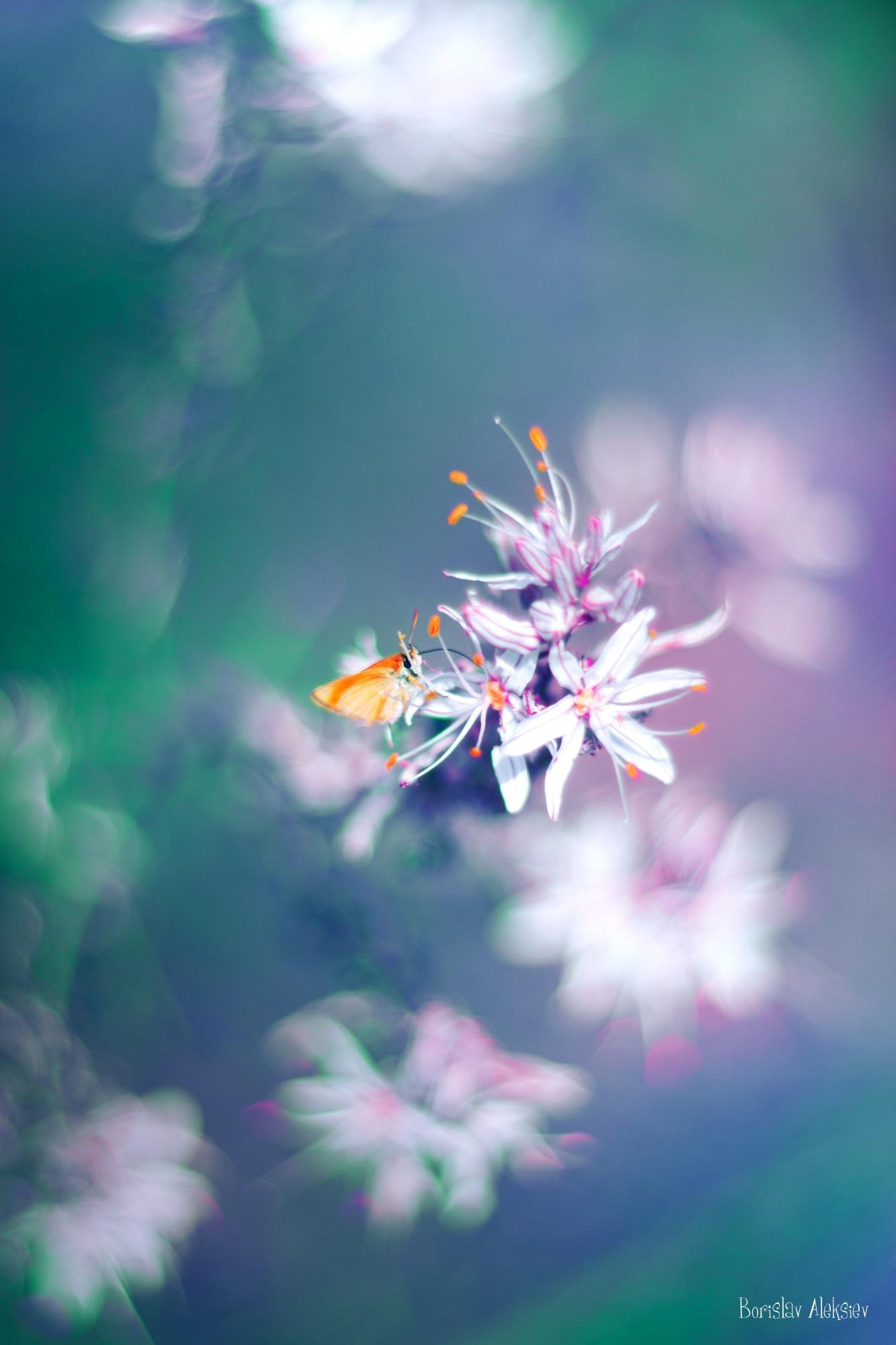 White,Blue and Green by Borislav Aleksiev