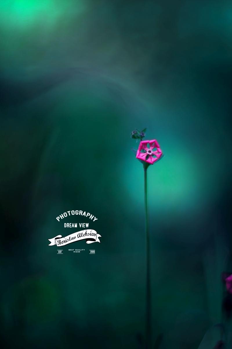 Blue - green by Borislav Aleksiev