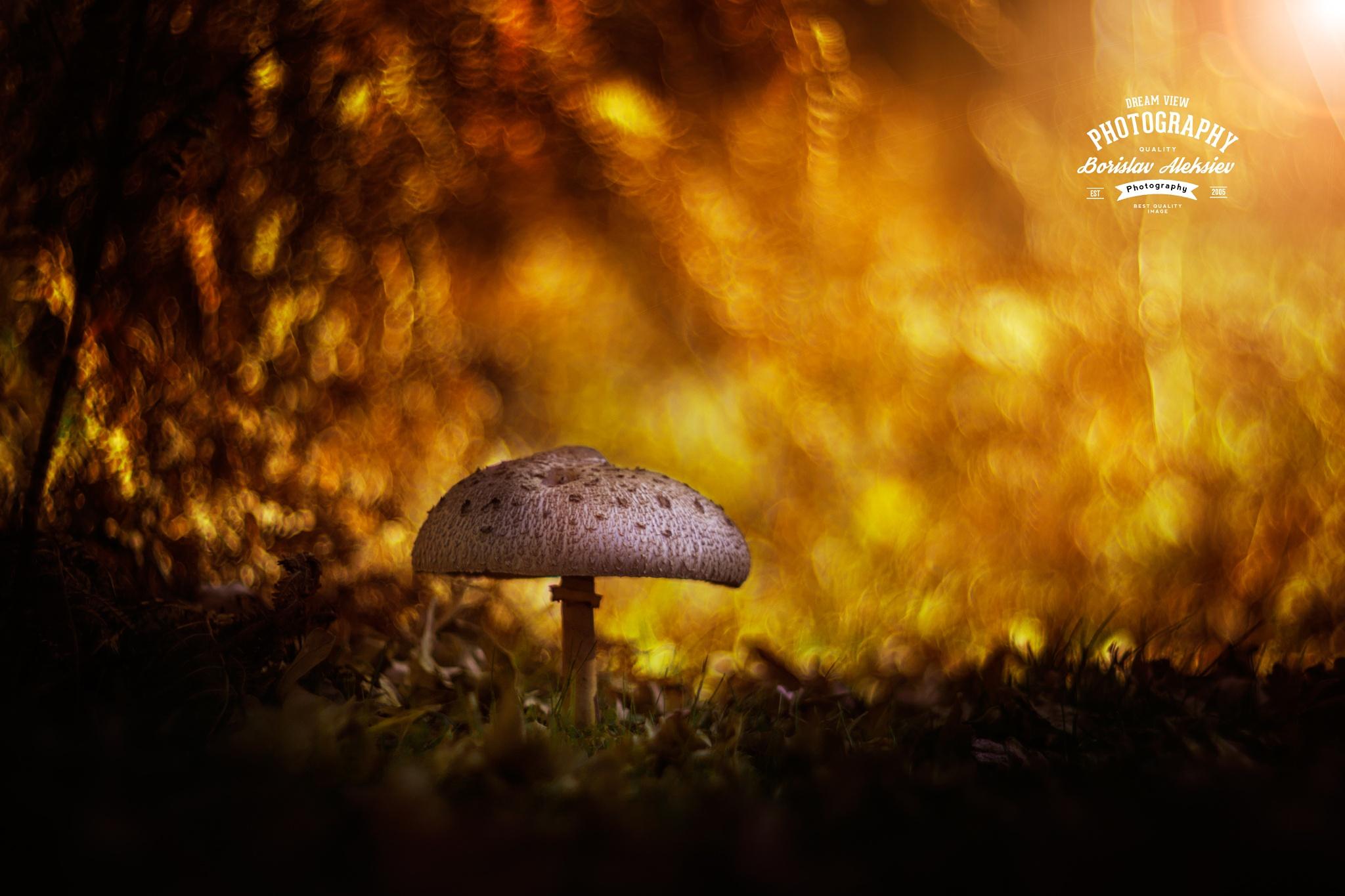 Golden Bokeh by Borislav Aleksiev