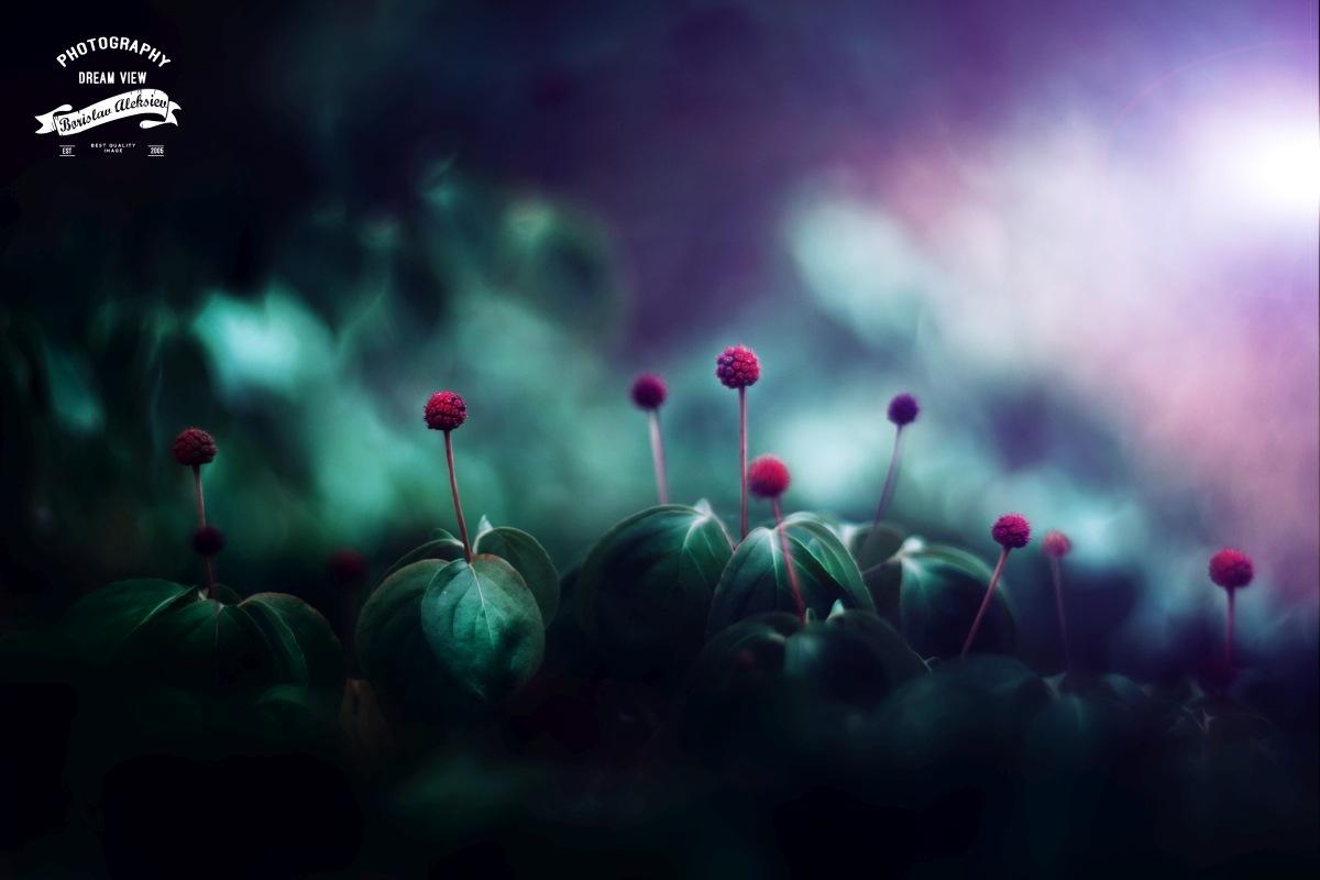 Red by Borislav Aleksiev