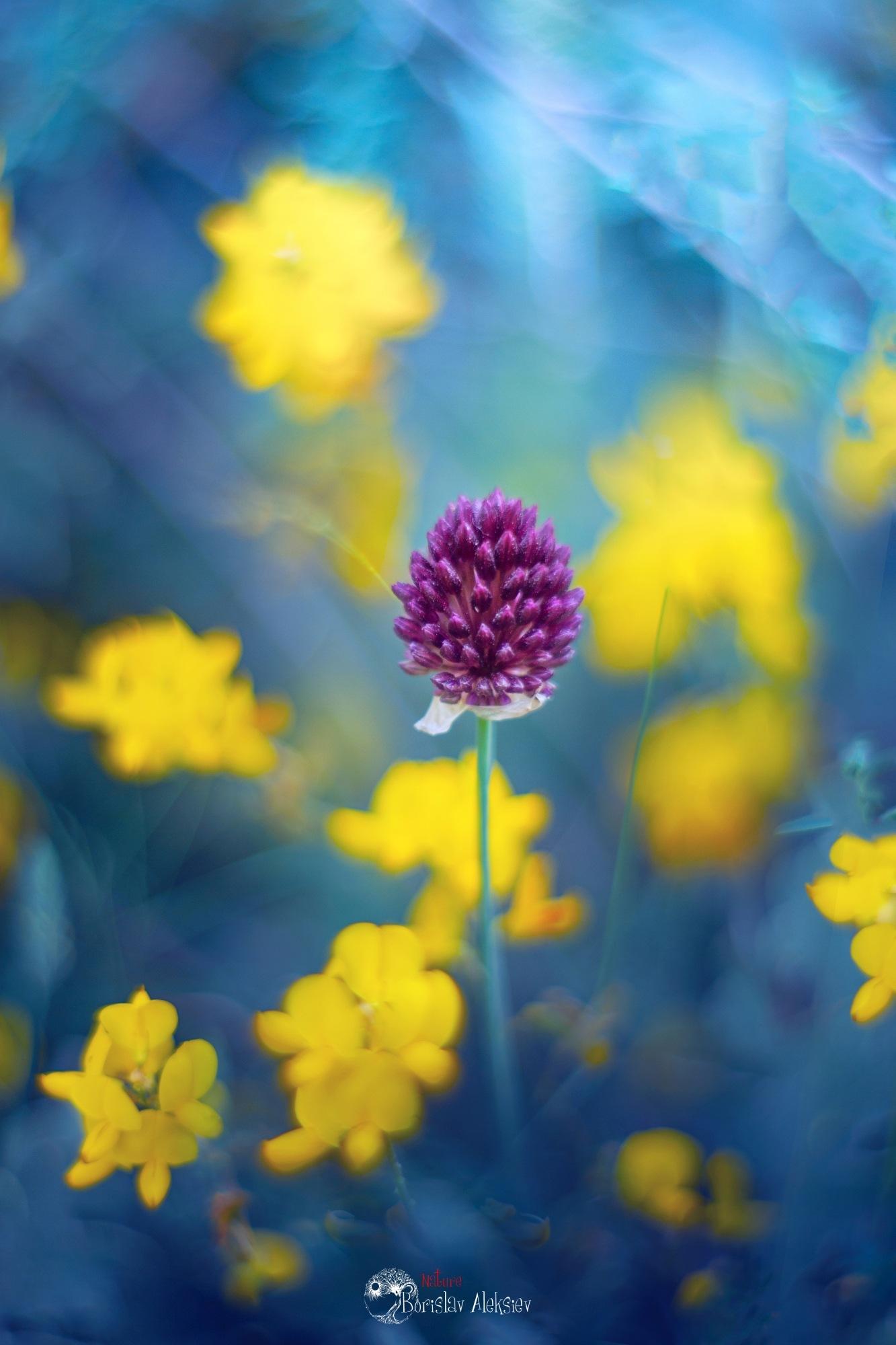 Yellow by Borislav Aleksiev