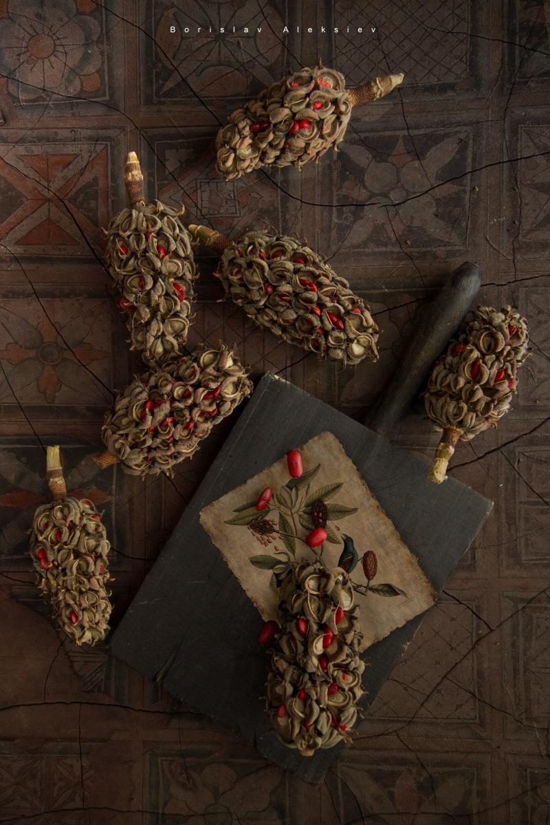Magnolia seeds by Borislav Aleksiev