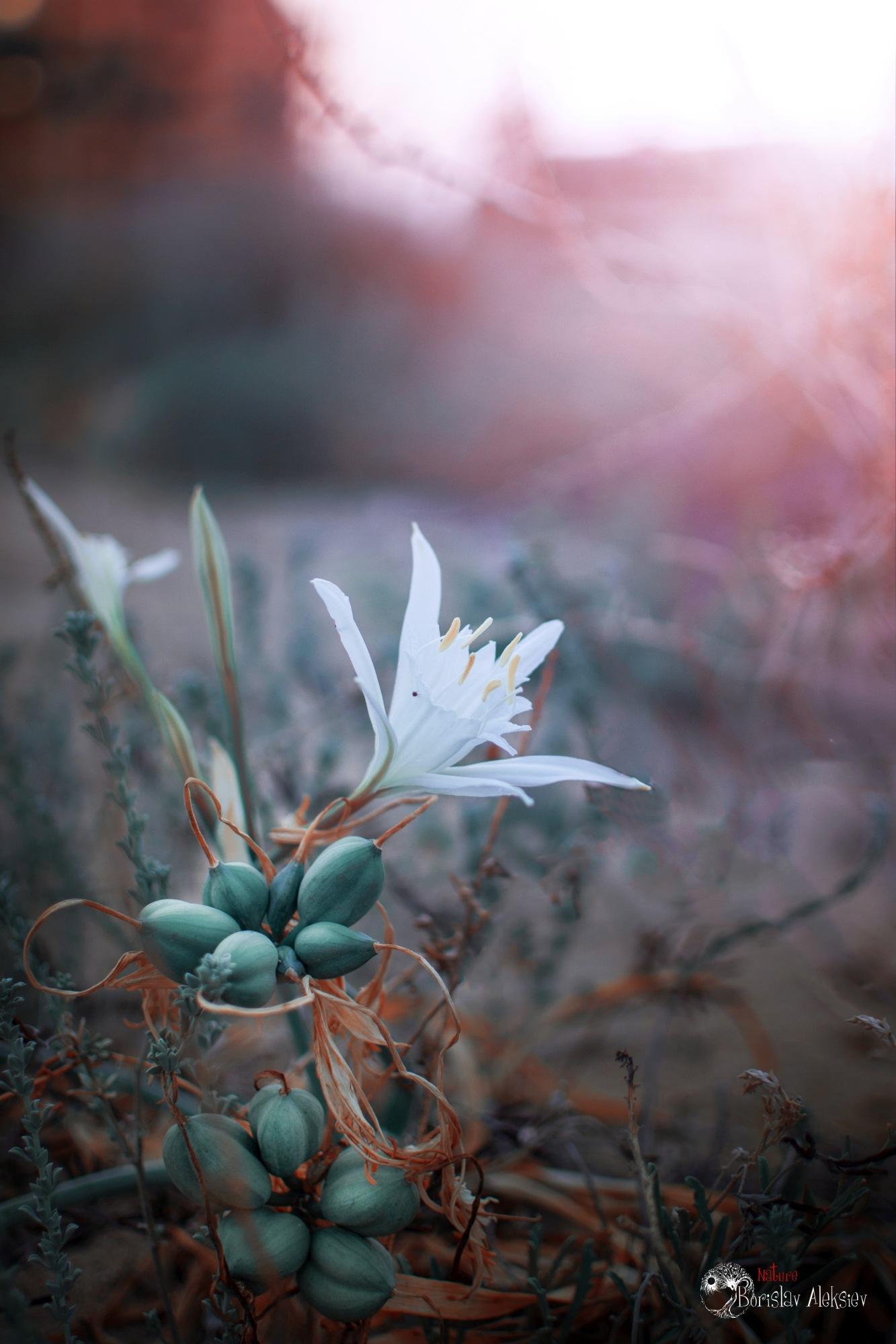 White by Borislav Aleksiev