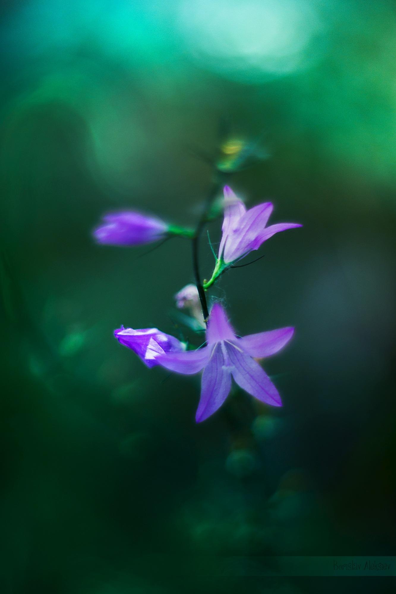 Purple and Green by Borislav Aleksiev