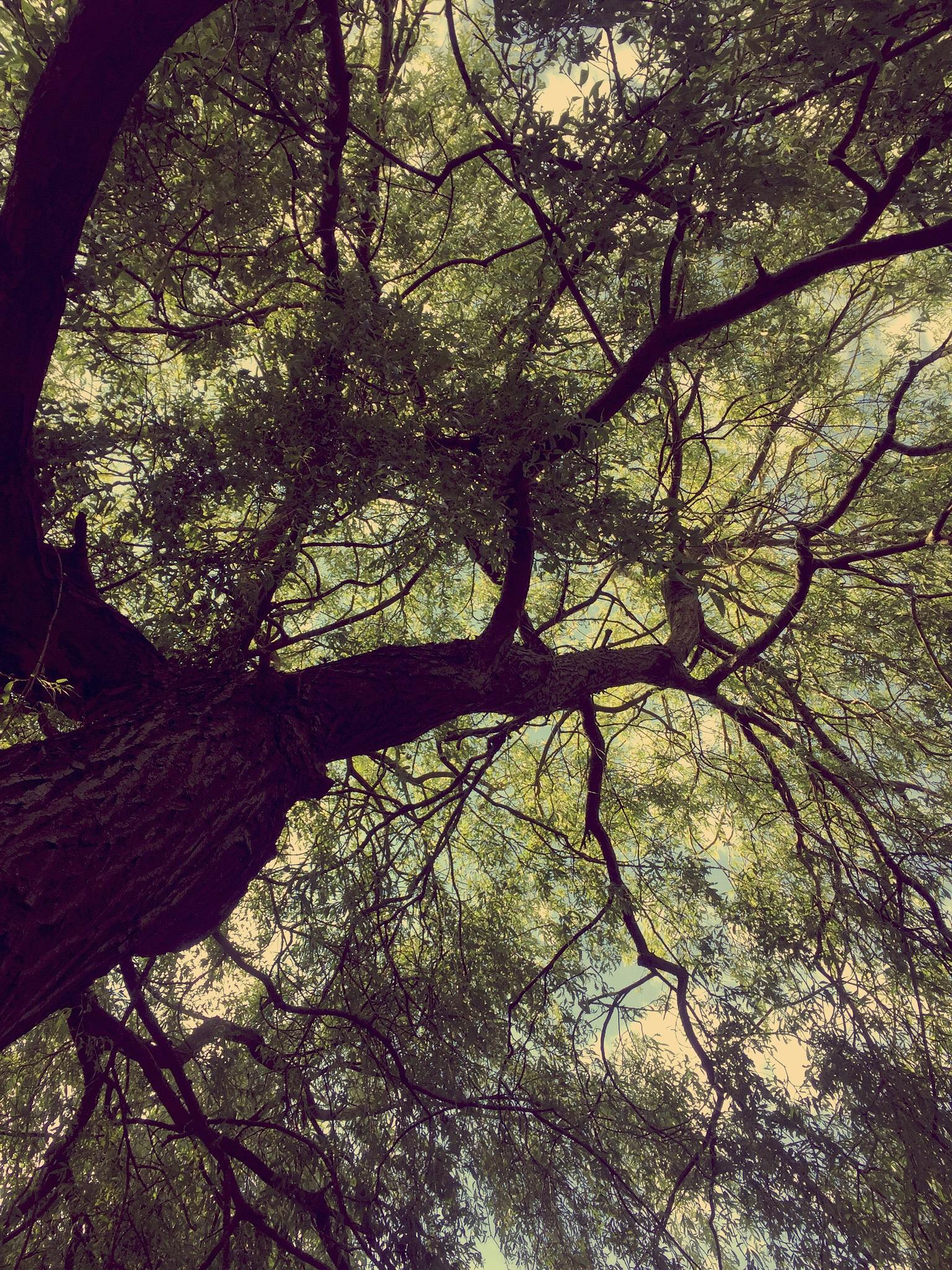 Tree  by Scrapbook Photography