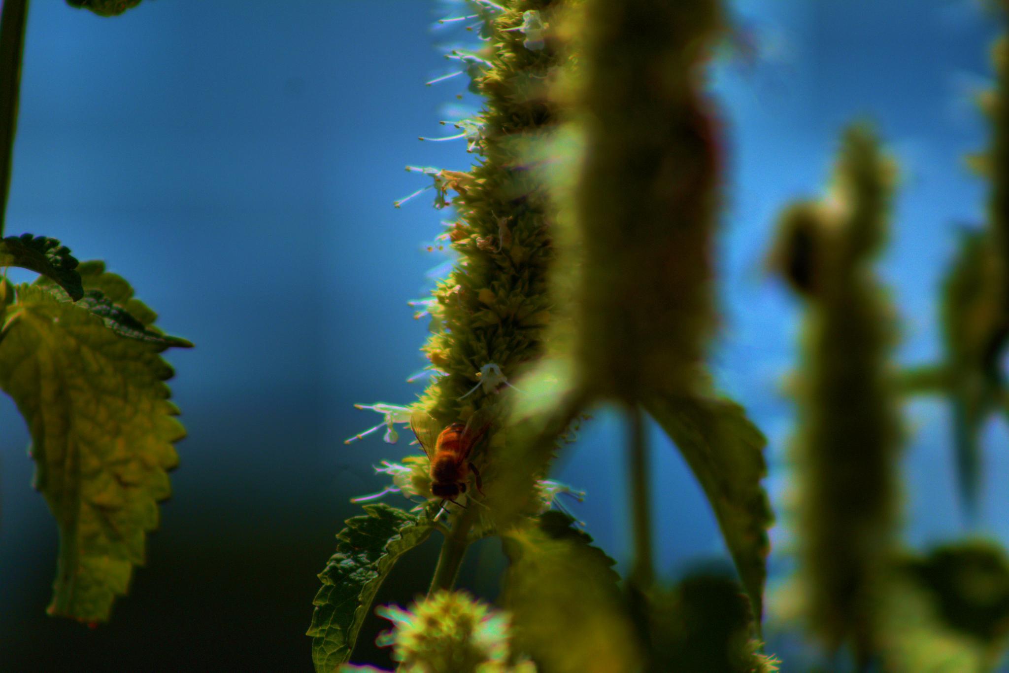 a bees life by Lisa Kelley