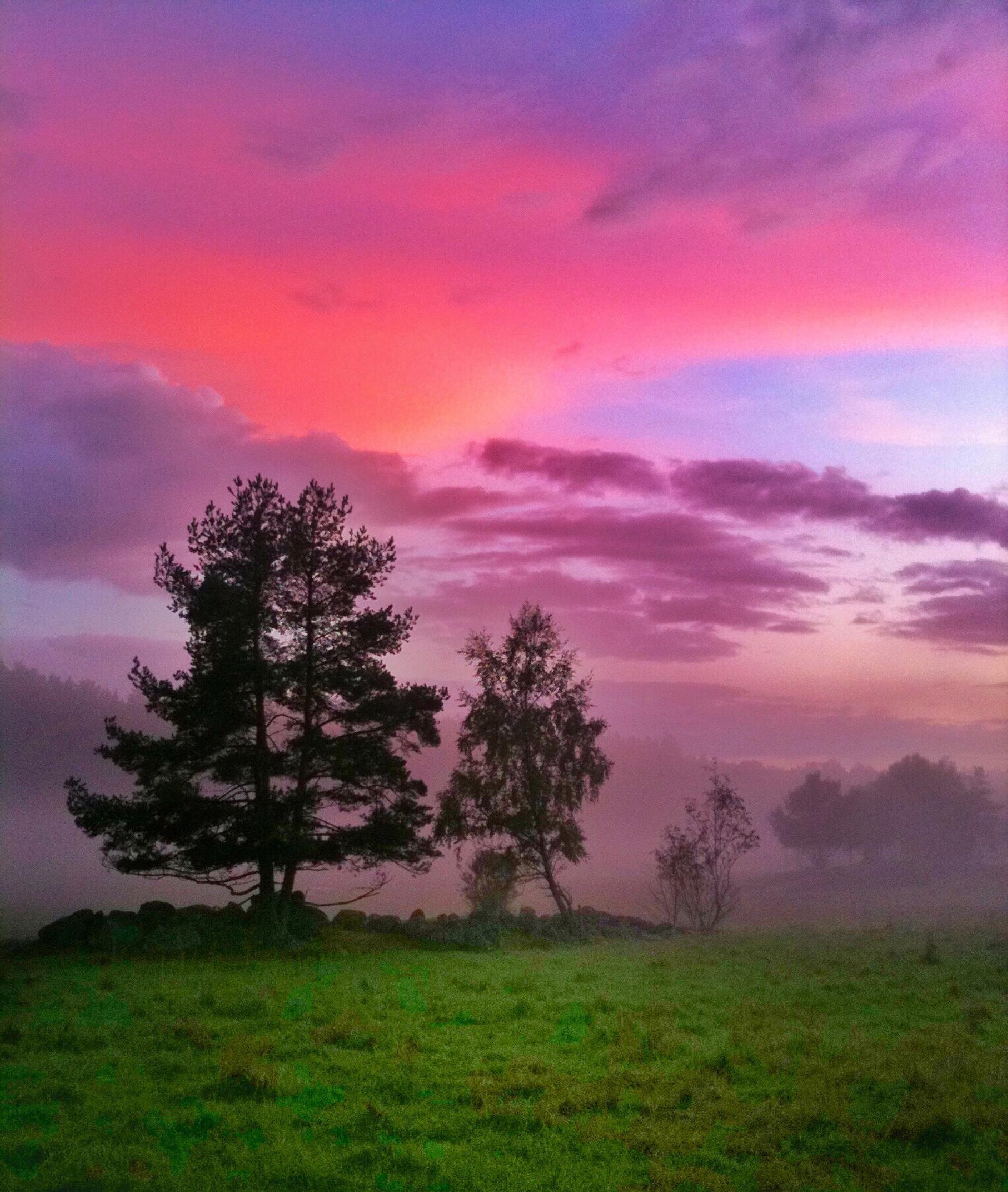 Misty morning by Stefan Schnöpf