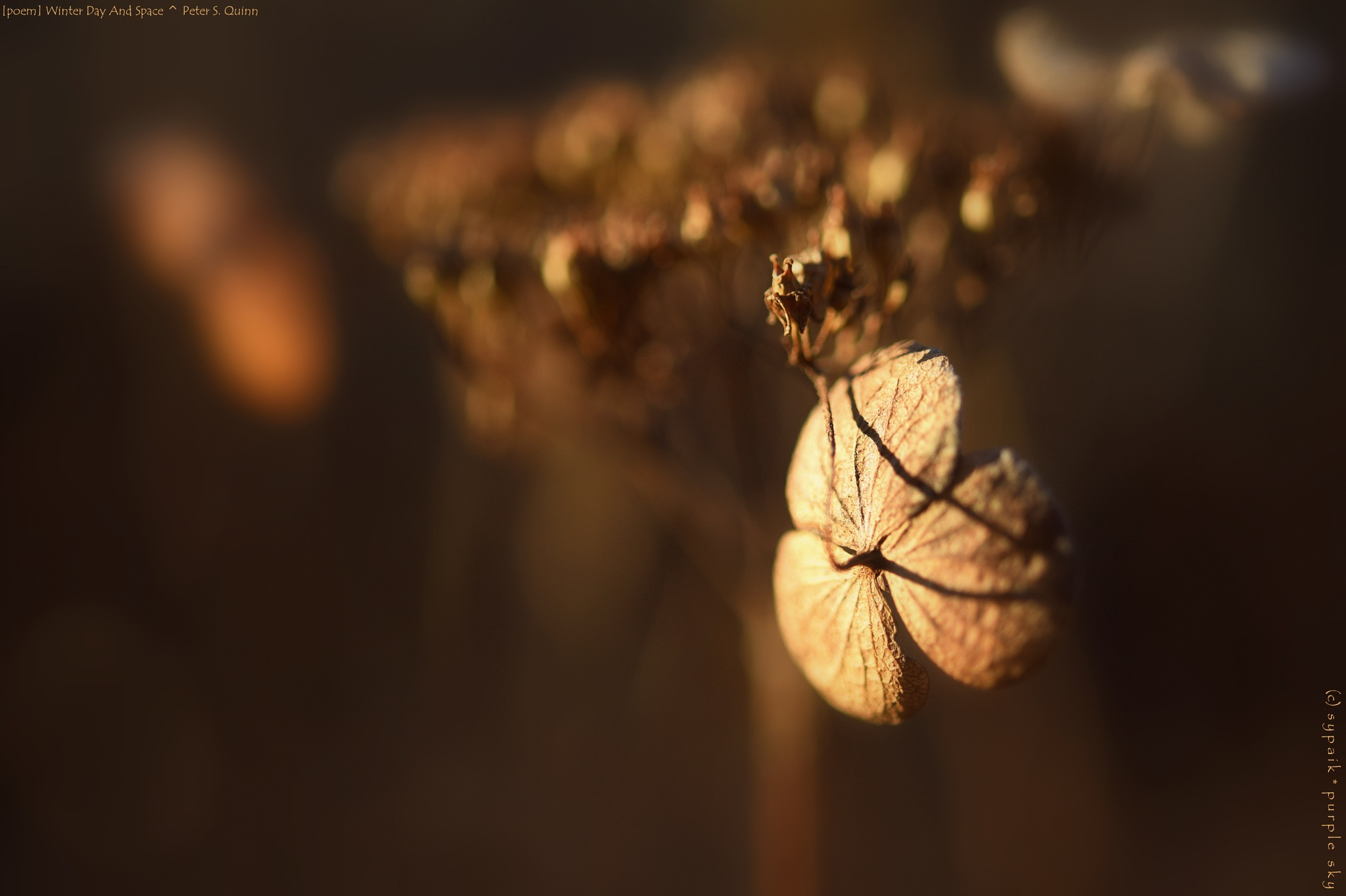 Winter Day And Space From Dried Flowers by sypaik