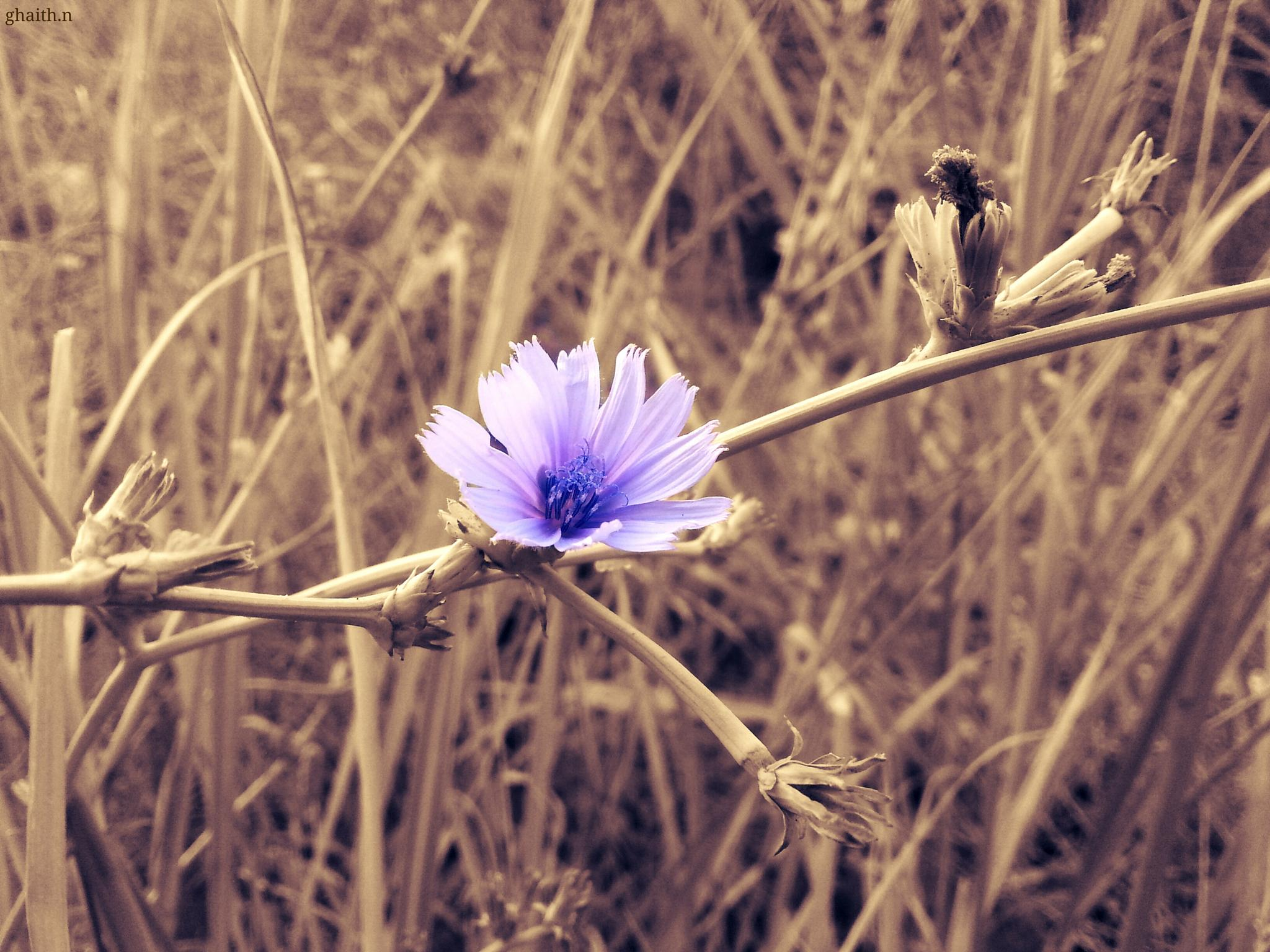 a small flower by ghaith