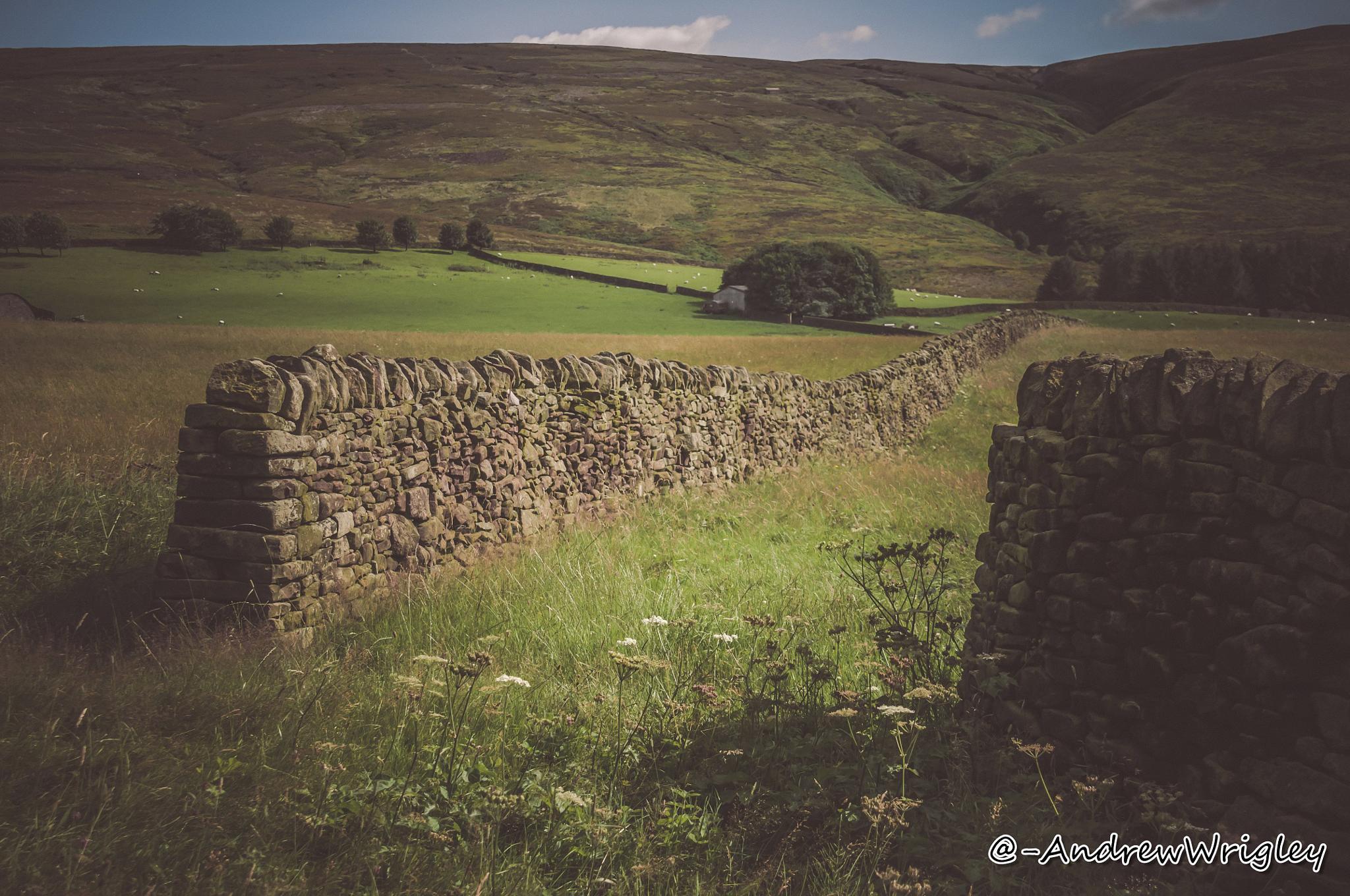 MOORFIELD by Andrew Wrigley