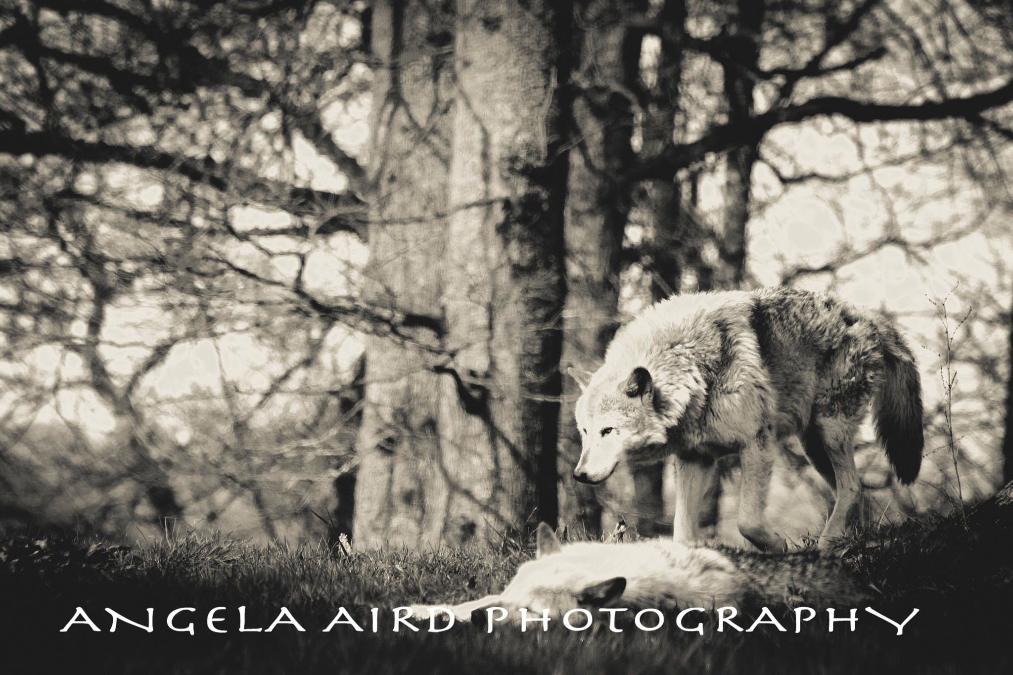 Untitled by Angie Aird