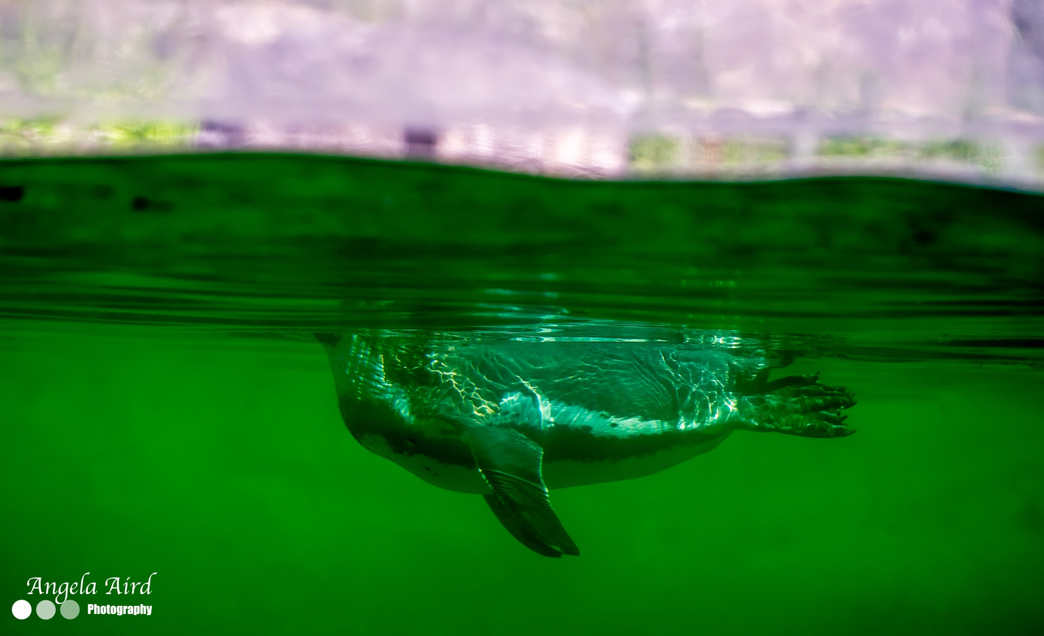 Going for a swim. by Angie Aird