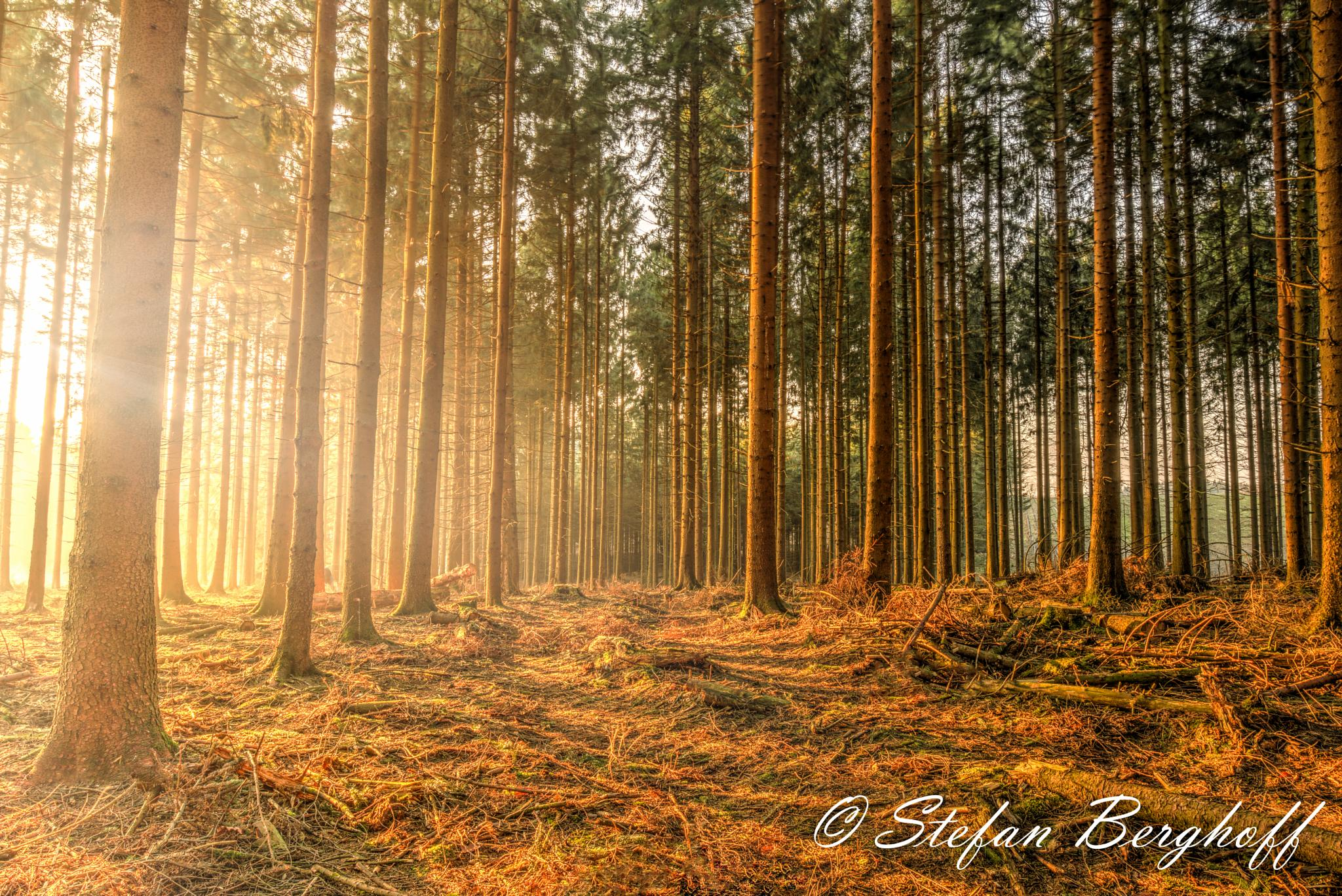 Im the Forest by Stefan Berghoff