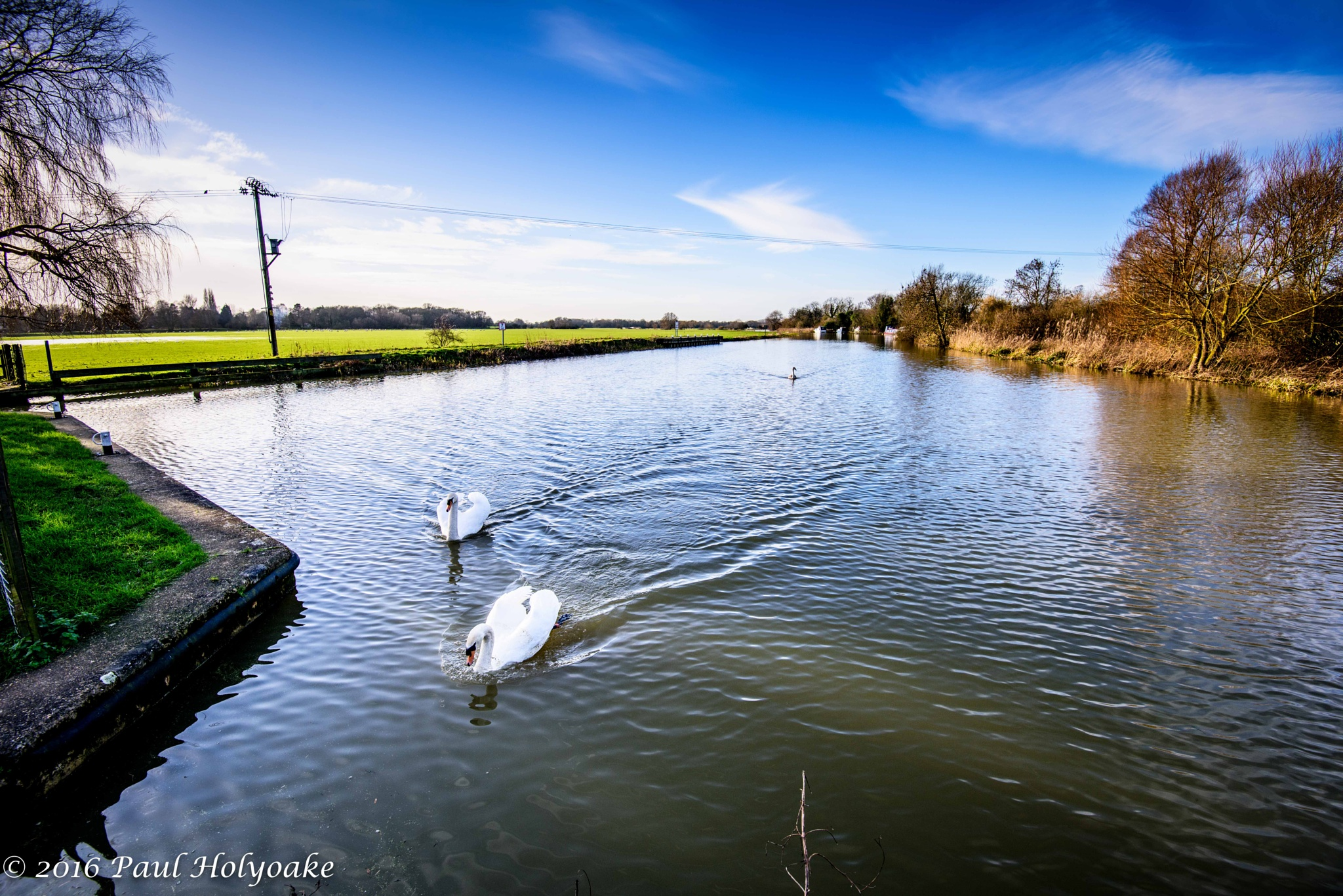 Swans by Photon