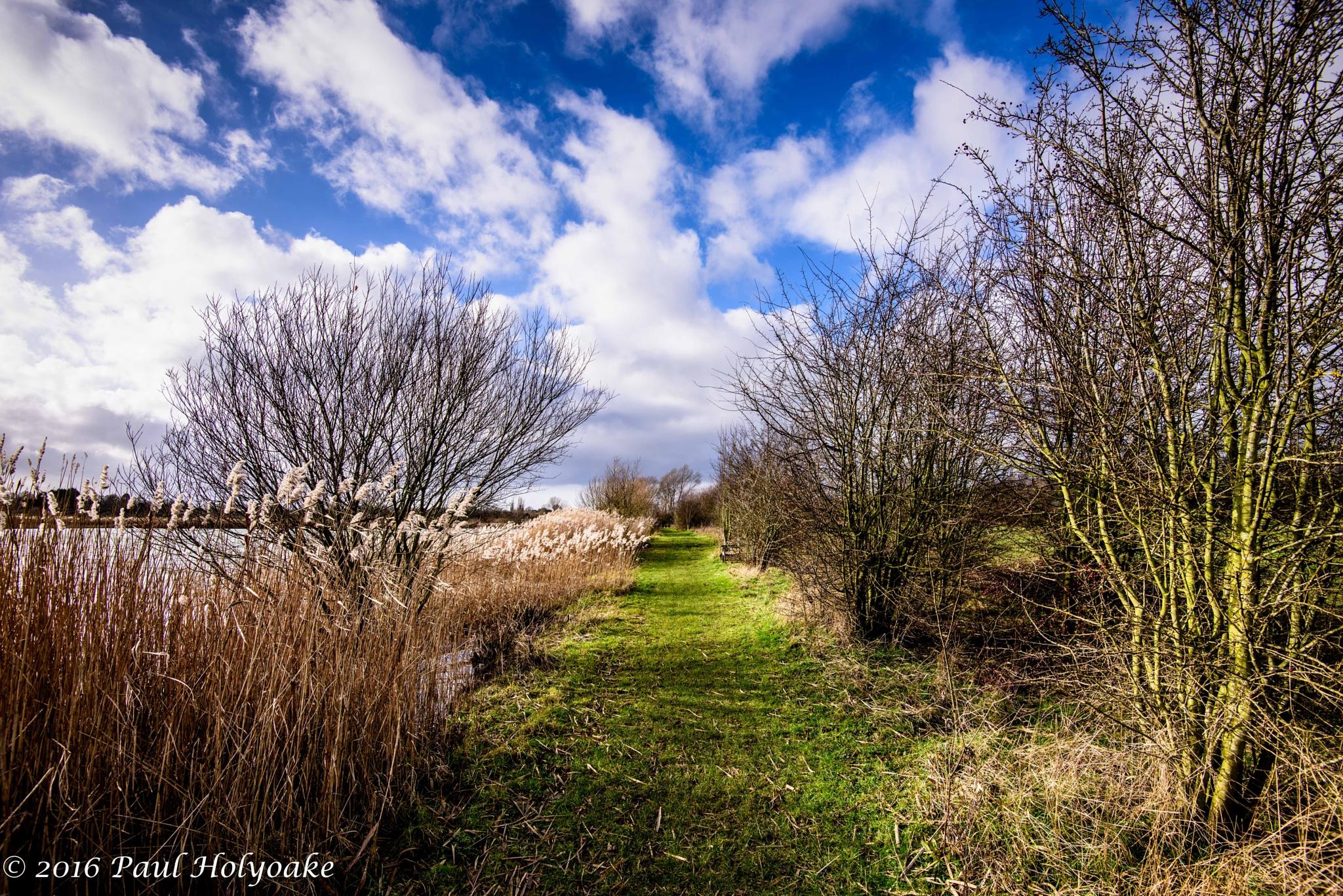 Lakeside Path by Photon